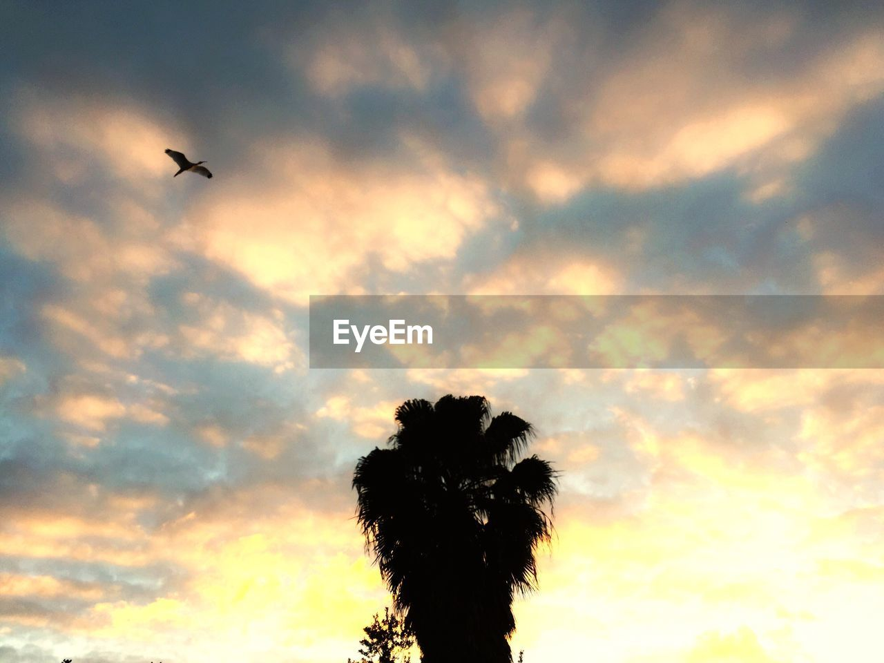 sky, low angle view, sunset, silhouette, flying, cloud - sky, nature, no people, tree, beauty in nature, outdoors, palm tree, scenics, animal themes, day, airplane, bird