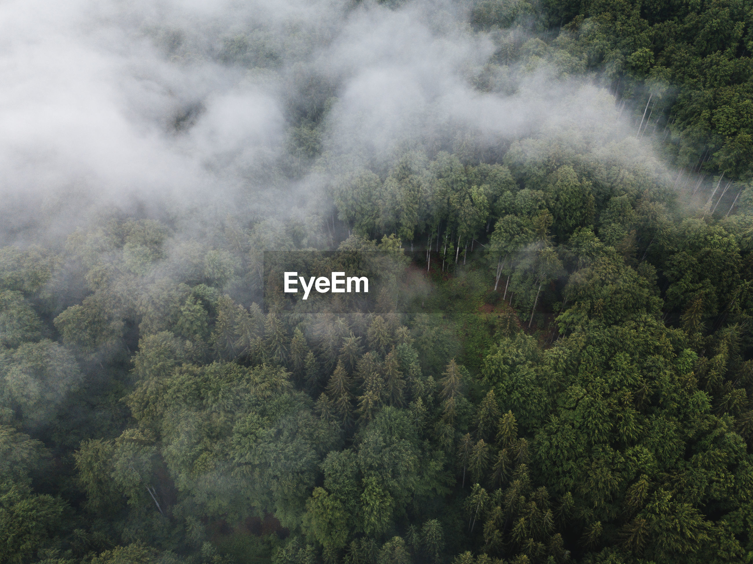 HIGH ANGLE VIEW OF PLANTS AND TREES IN FOREST