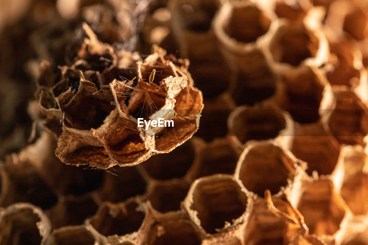 close-up, honeycomb, invertebrate, no people, beehive, insect, focus on foreground, apiculture, selective focus, bee, animals in the wild, animal, animal themes, natural pattern, brown, animal wildlife, day, nature, beauty in nature, dry