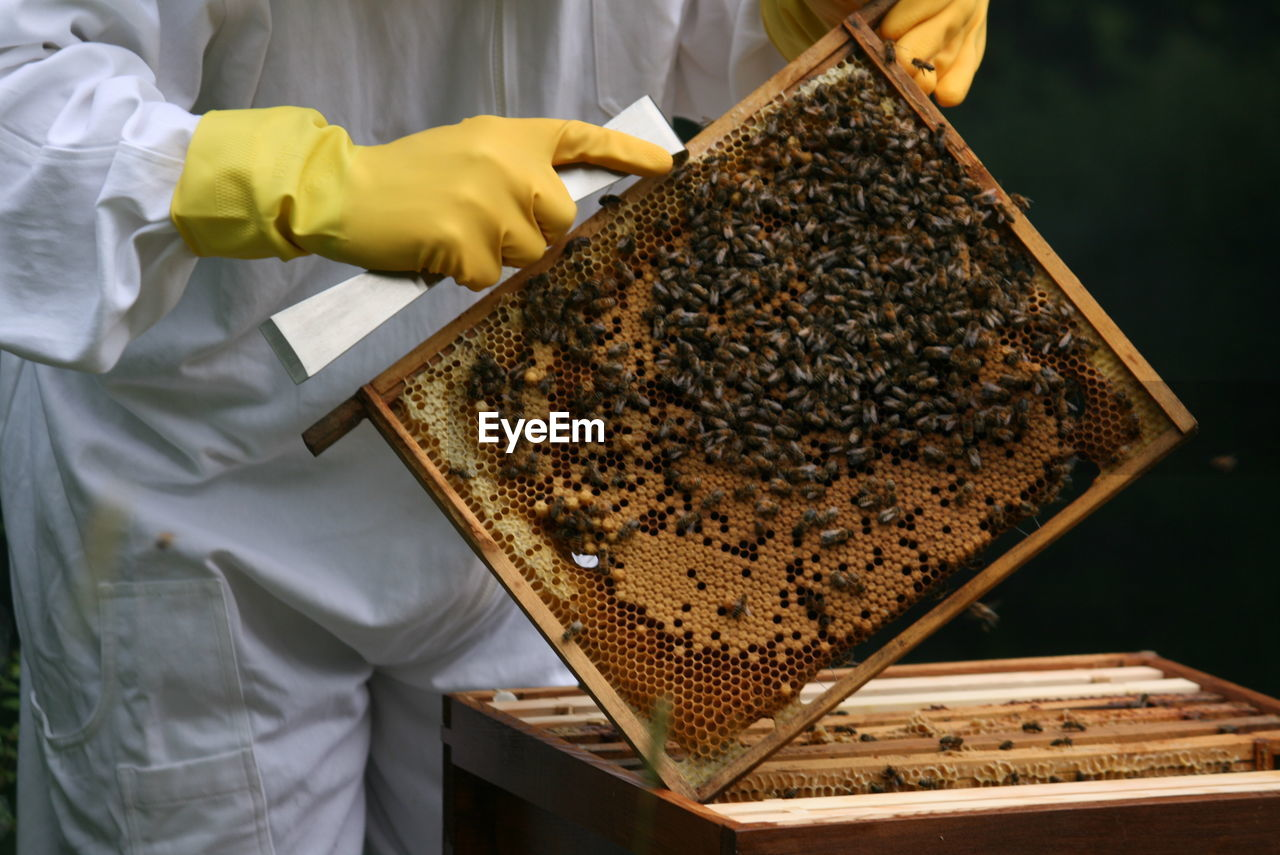 Midsection Of Beekeeper Holding Beehive