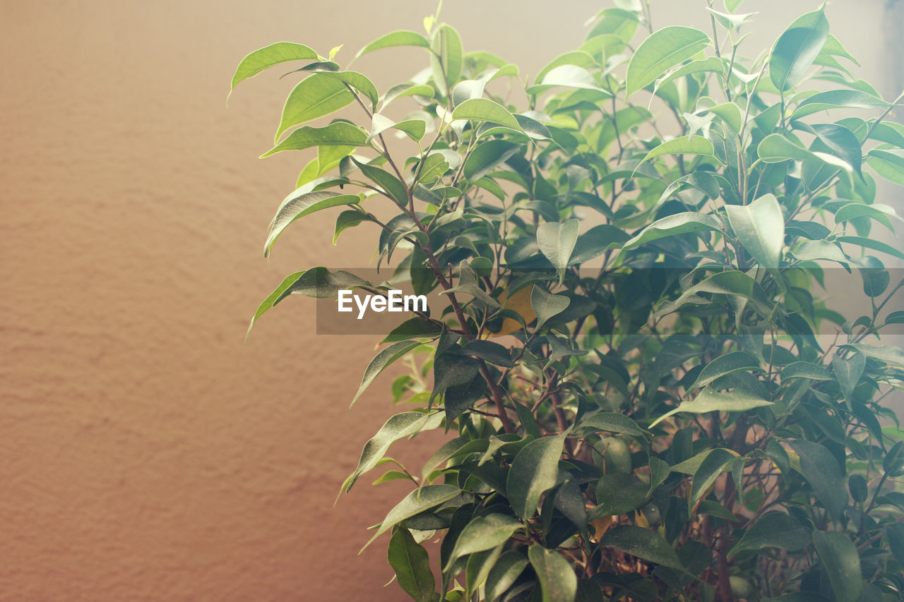 plant part, leaf, plant, growth, green color, close-up, beauty in nature, nature, focus on foreground, day, no people, outdoors, freshness, wall - building feature, tranquility, plant stem, sunlight, selective focus, vulnerability