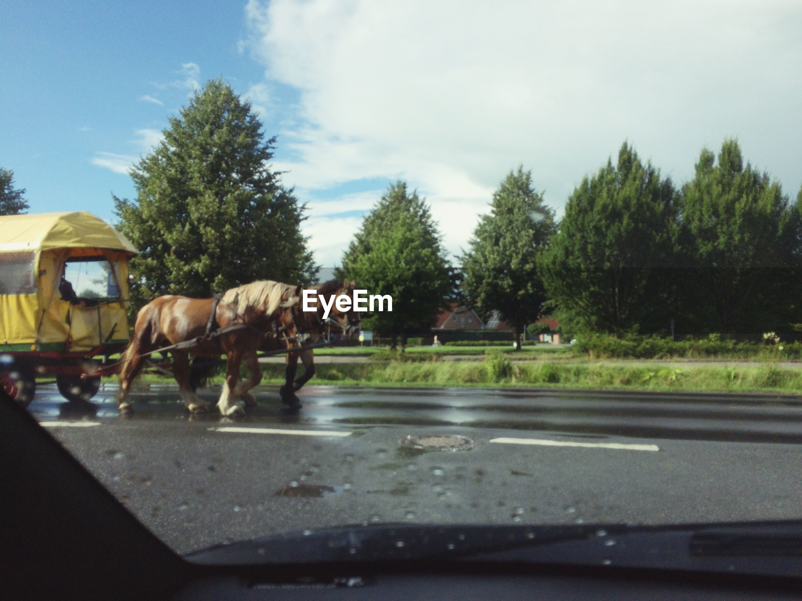 HORSE CART ON ROAD AGAINST SKY