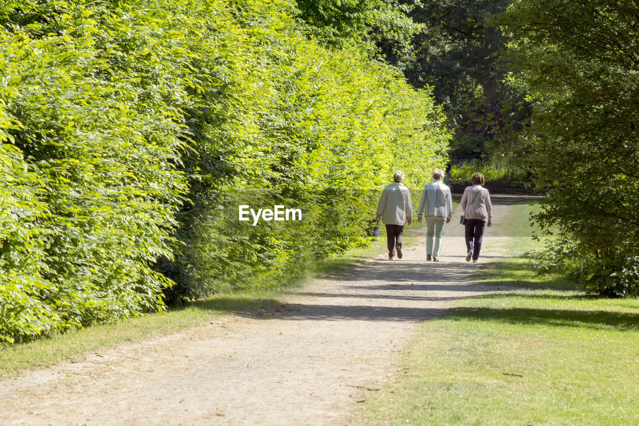 rear view, plant, walking, tree, full length, footpath, adult, nature, green color, men, women, togetherness, the way forward, group of people, direction, casual clothing, sunlight, motion, people, day, outdoors