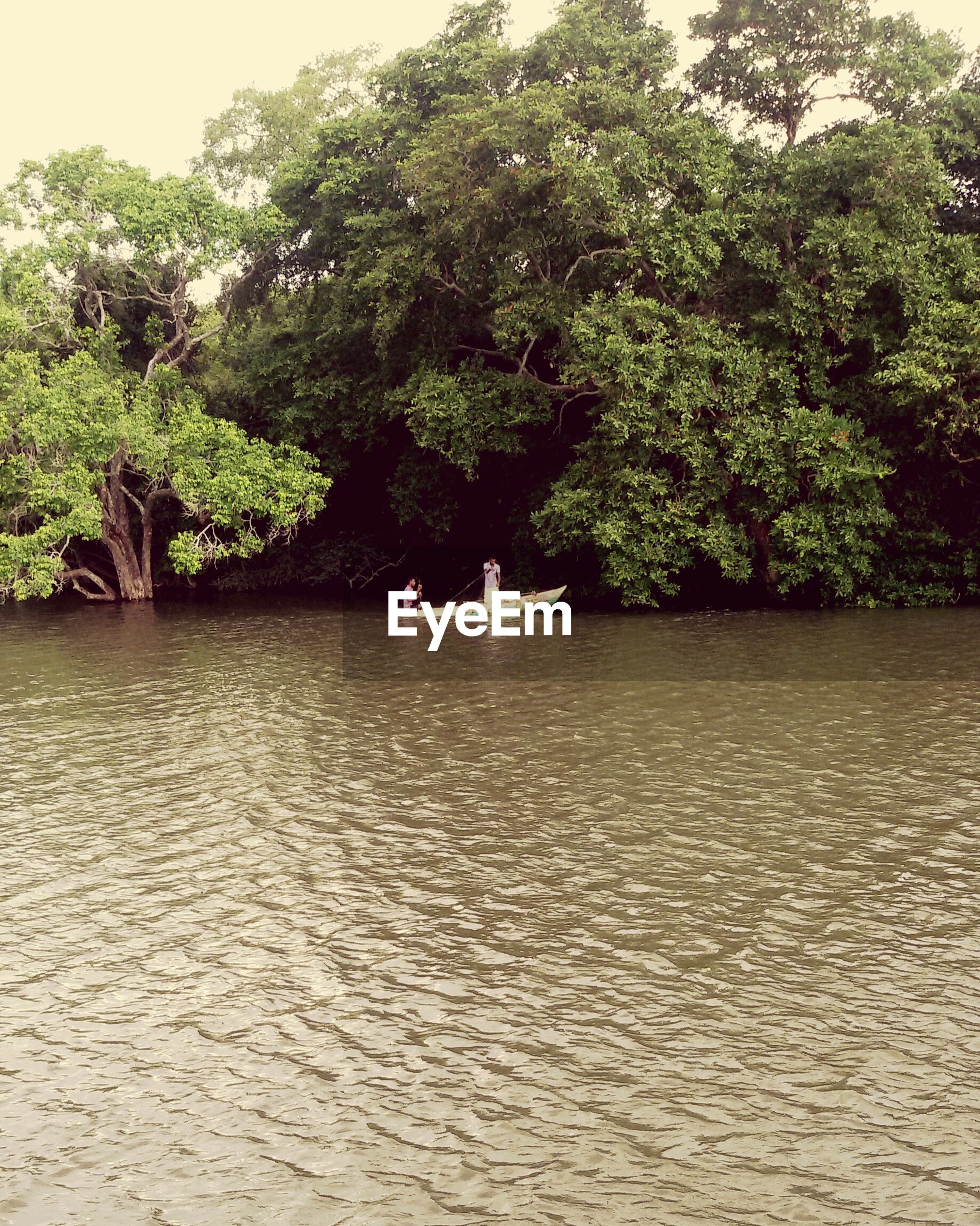 tree, water, waterfront, tranquility, tranquil scene, nature, growth, beauty in nature, scenics, green color, rippled, river, day, lake, idyllic, outdoors, lush foliage, nautical vessel, transportation, sunlight