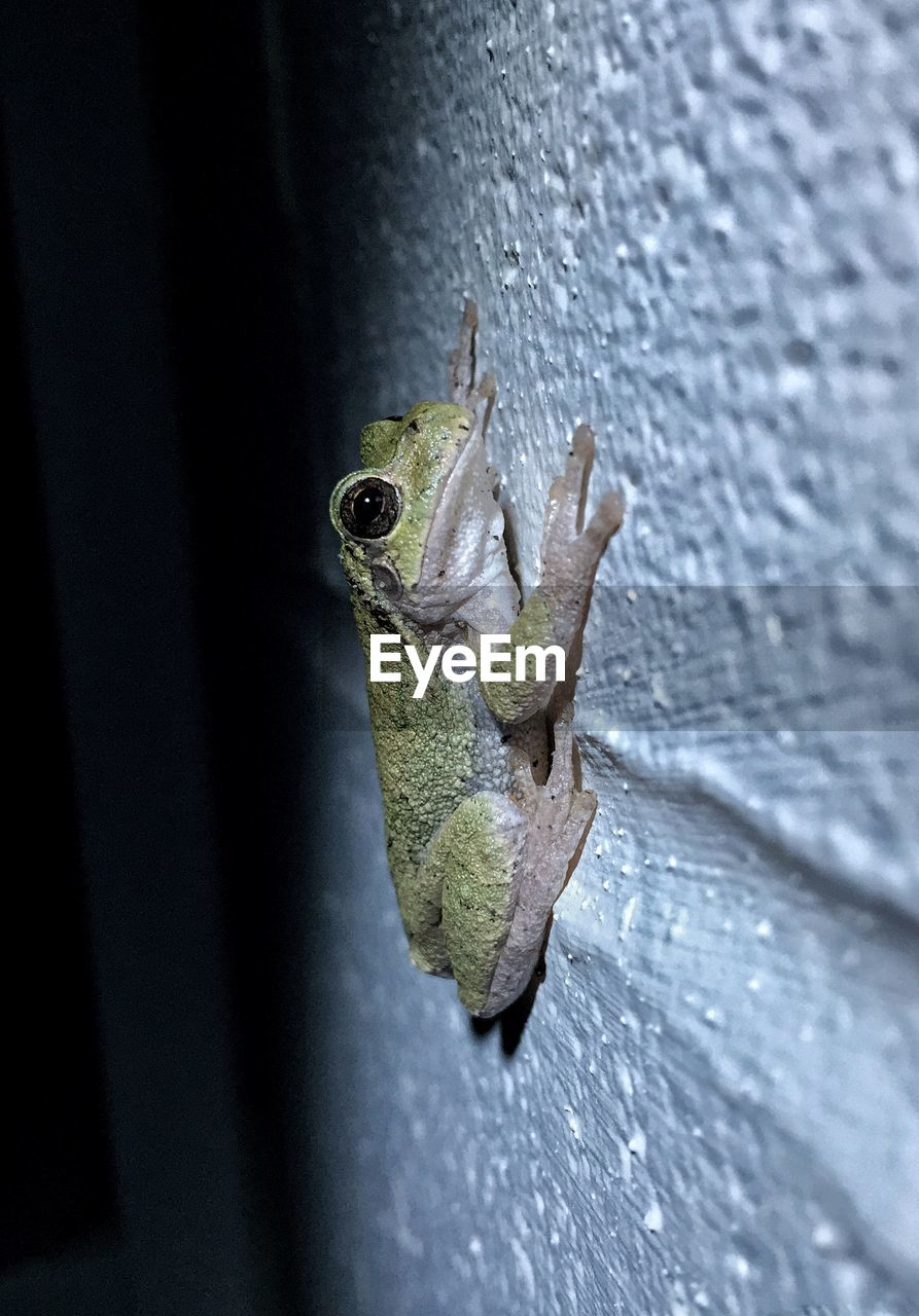 Close-up of frog against wall