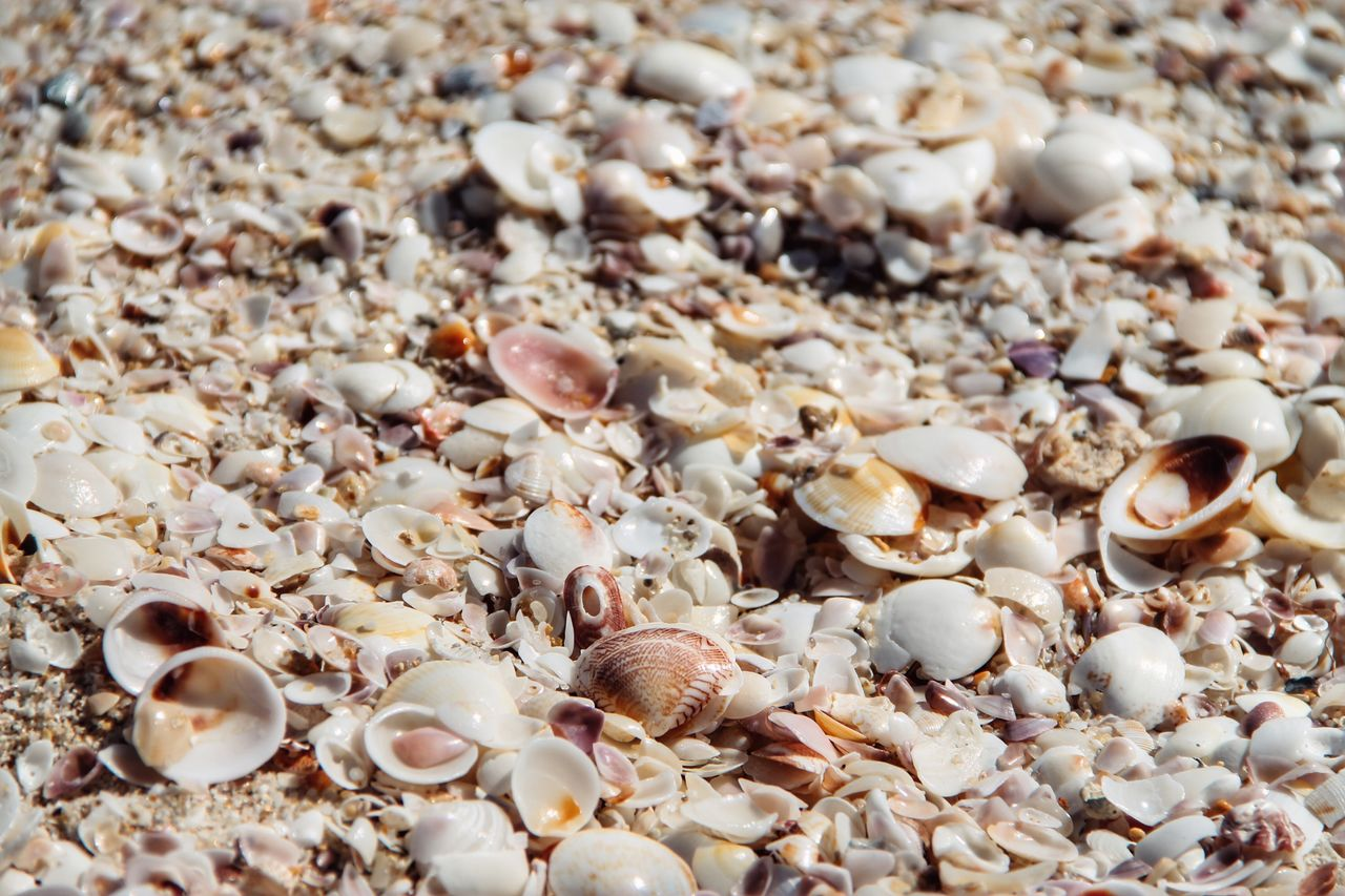 shell, close-up, no people, seashell, backgrounds, large group of objects, selective focus, full frame, animal shell, still life, abundance, food, animal wildlife, food and drink, beach, indoors, animal, day, land, high angle view, pebble