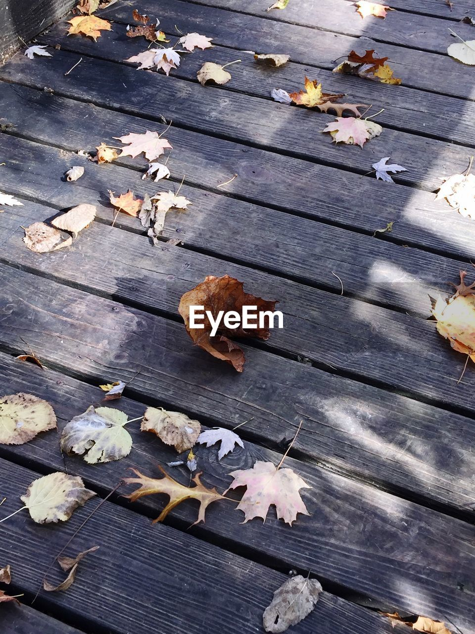 autumn, leaf, change, leaves, dry, wood - material, fallen, no people, outdoors, high angle view, nature, maple leaf, day, fragility, beauty in nature, close-up