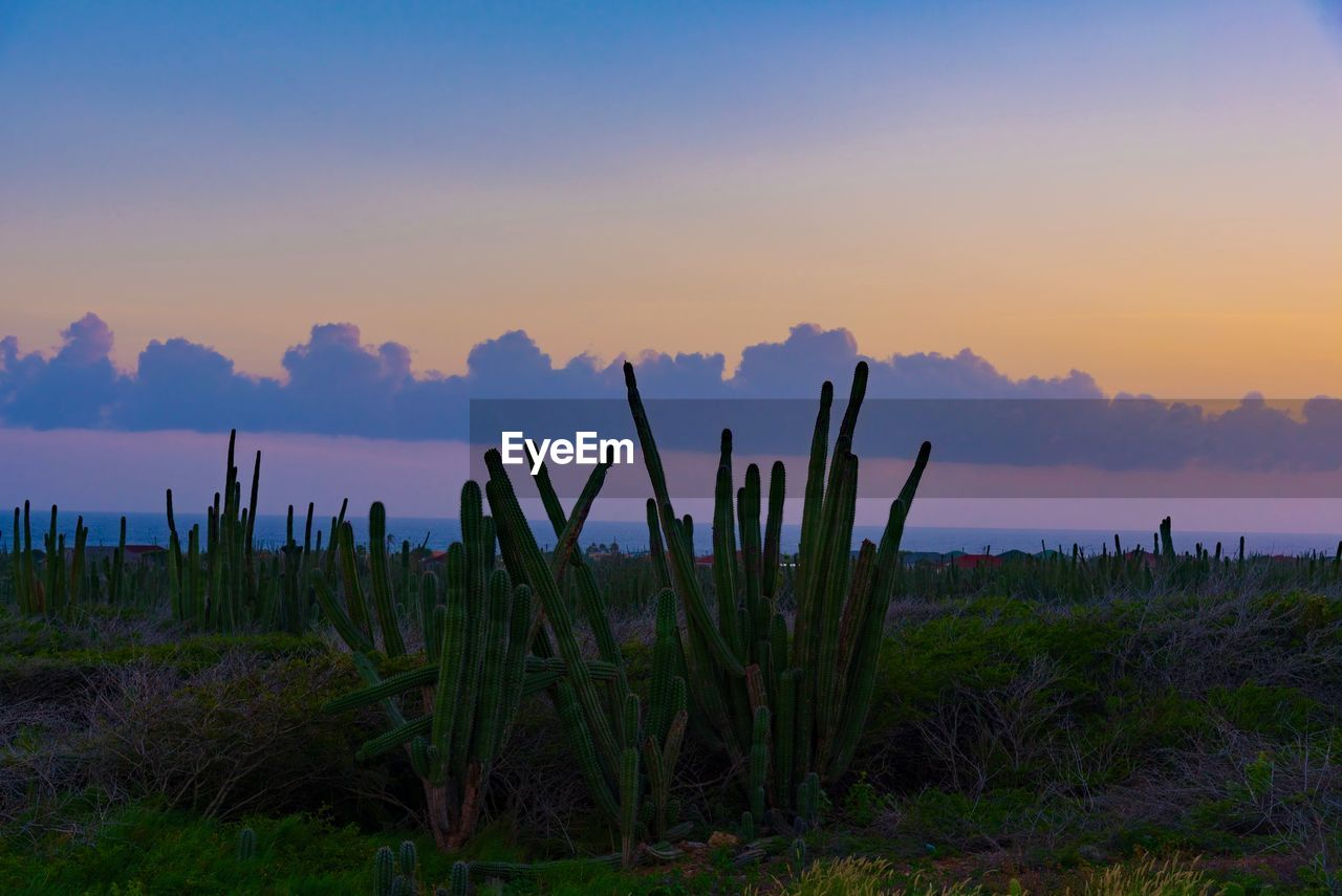 sky, sunset, plant, tranquility, beauty in nature, tranquil scene, scenics - nature, growth, water, nature, land, non-urban scene, no people, outdoors, sea, cloud - sky, silhouette, succulent plant, idyllic