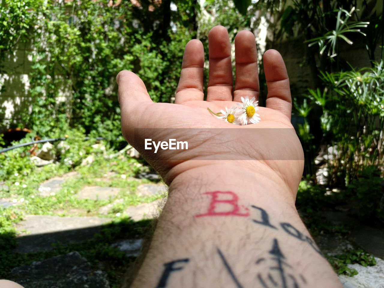 Close-Up Of Human Hand With Tattoo Holding Flowers Against Plants