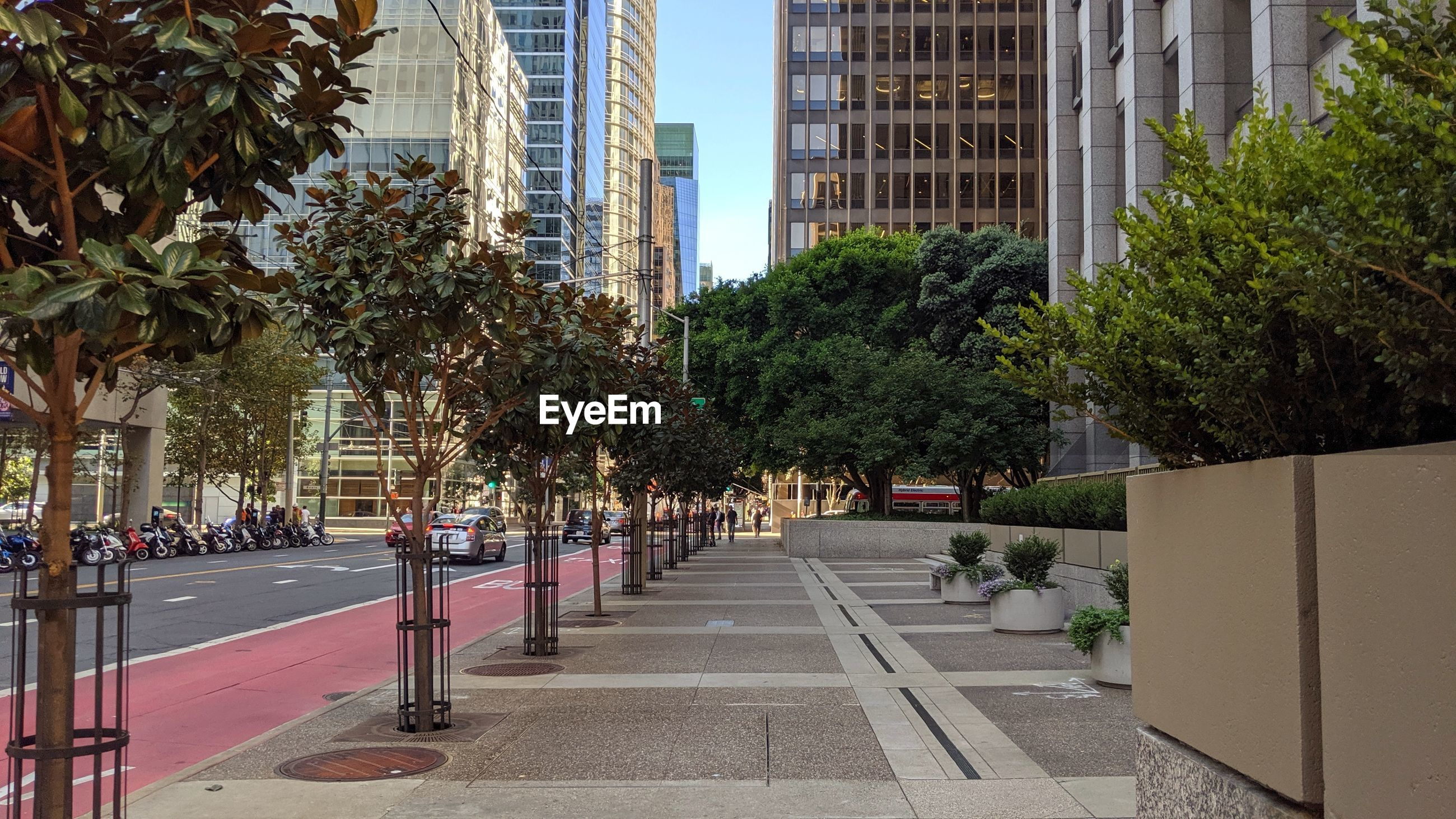 CITY STREET AMIDST TREES AND BUILDINGS