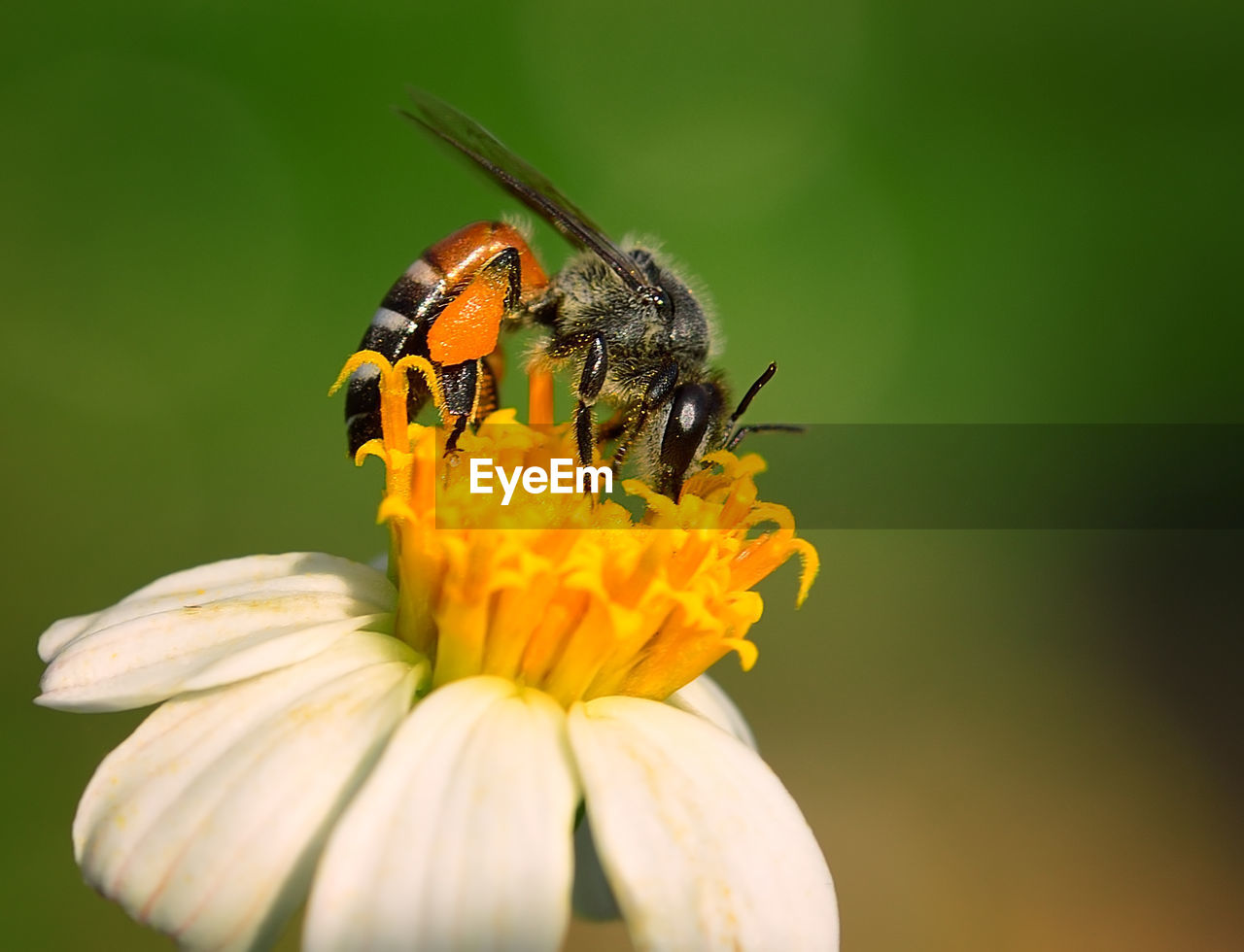 flowering plant, flower, invertebrate, insect, animals in the wild, animal themes, fragility, animal wildlife, flower head, vulnerability, beauty in nature, petal, animal, one animal, freshness, plant, inflorescence, close-up, growth, pollination, yellow, pollen, no people, outdoors, animal wing