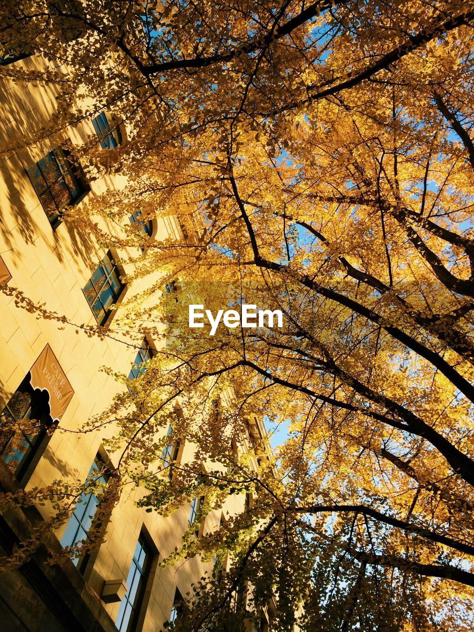 tree, autumn, branch, building exterior, architecture, built structure, growth, change, low angle view, outdoors, nature, day, leaf, beauty in nature, no people, city, skyscraper, sky