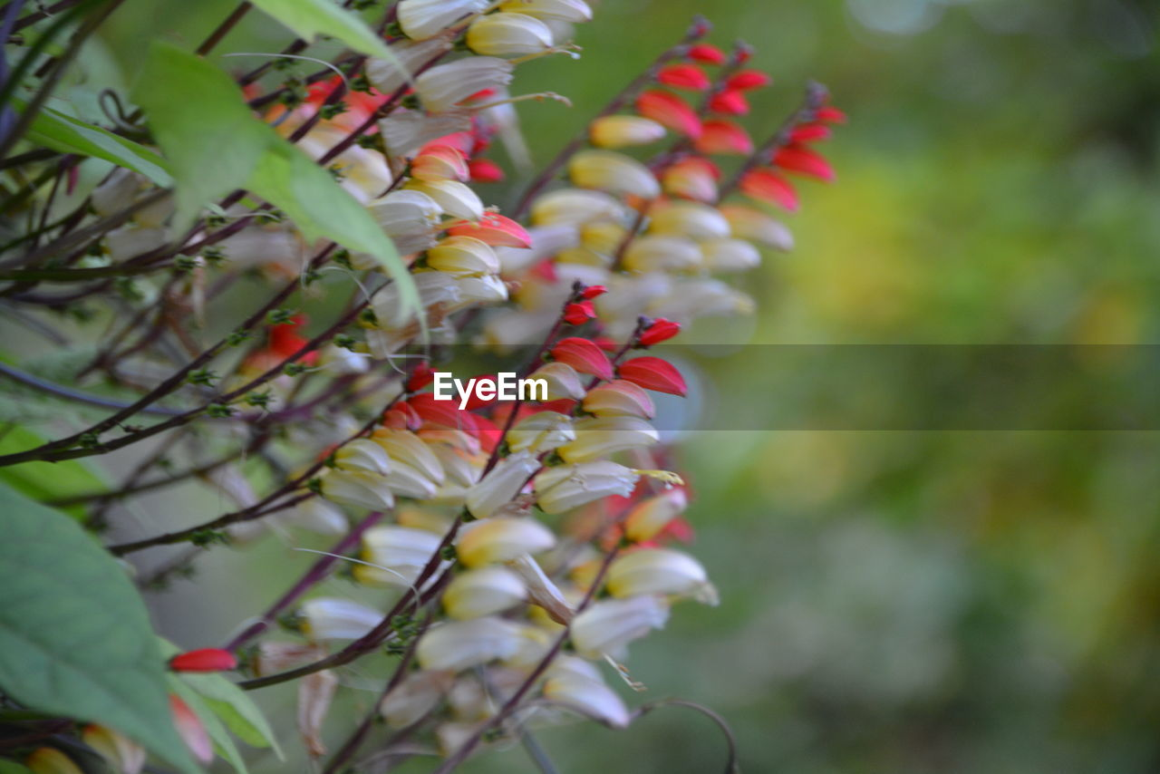 growth, nature, tree, beauty in nature, outdoors, day, freshness, no people, flower, branch, plant, fragility, close-up