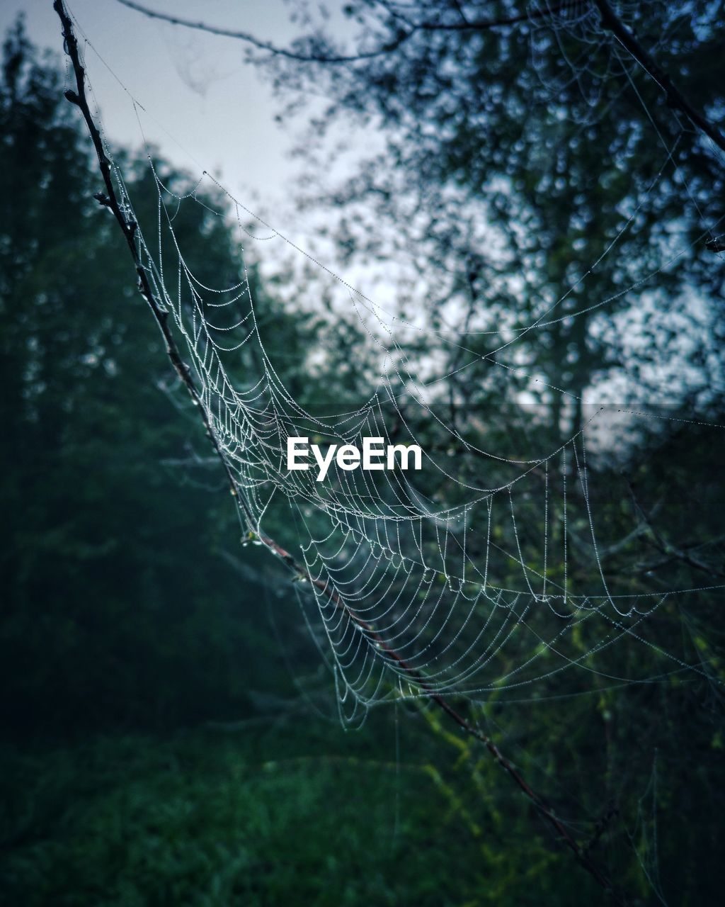 spider web, fragility, plant, vulnerability, focus on foreground, close-up, nature, tree, no people, day, growth, beauty in nature, tranquility, complexity, trapped, land, outdoors, selective focus, intricacy, forest, web