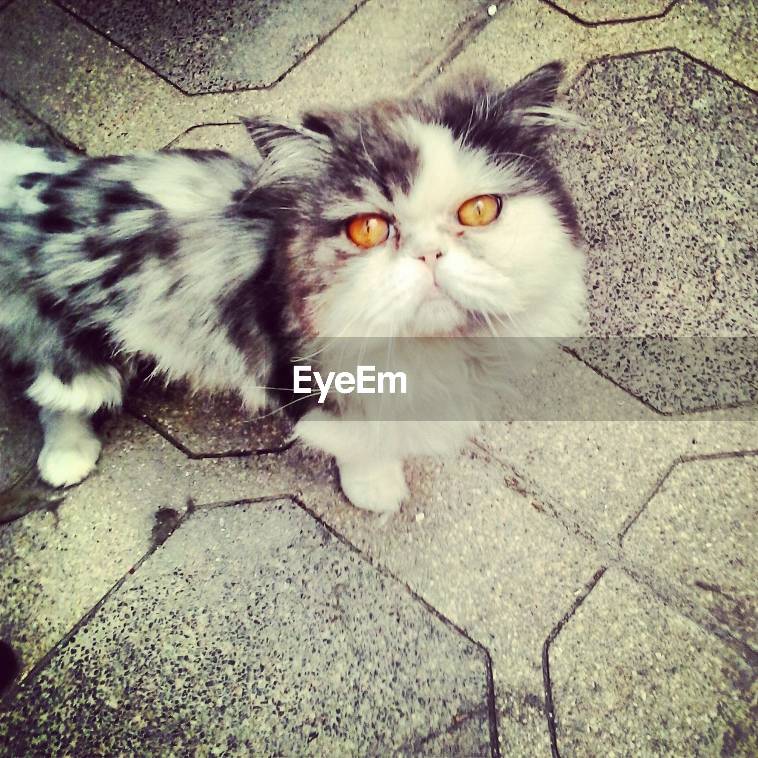 one animal, animal themes, domestic cat, pets, domestic animals, cat, feline, mammal, portrait, looking at camera, whisker, high angle view, sitting, street, alertness, full length, close-up, relaxation, staring, footpath