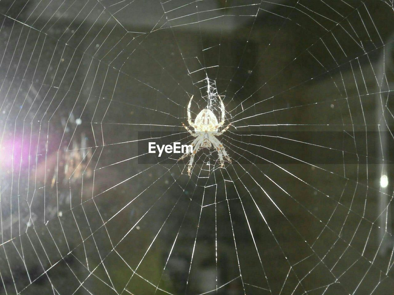 spider web, spider, web, survival, fragility, close-up, no people, focus on foreground, one animal, outdoors, nature, animal themes, day