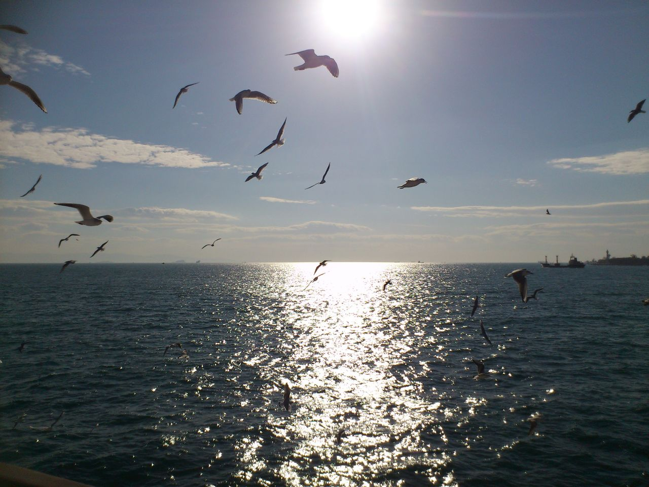 flying, bird, sea, sunlight, animal themes, nature, sunbeam, silhouette, sun, sky, mid-air, beauty in nature, animals in the wild, horizon over water, water, flock of birds, large group of animals, sunset, tranquil scene, scenics, tranquility, spread wings, outdoors, no people, day
