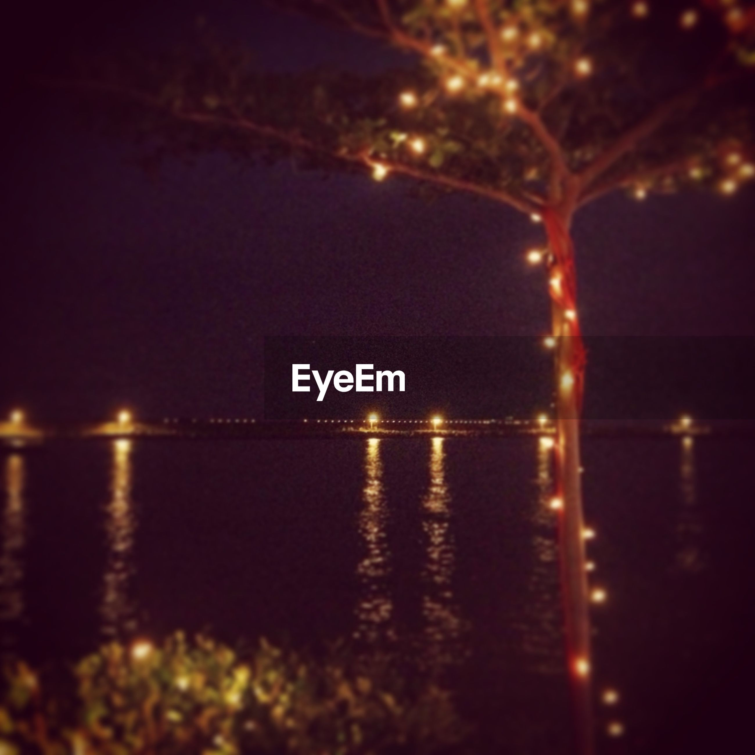 Illuminated lighting on tree by river against clear sky at night