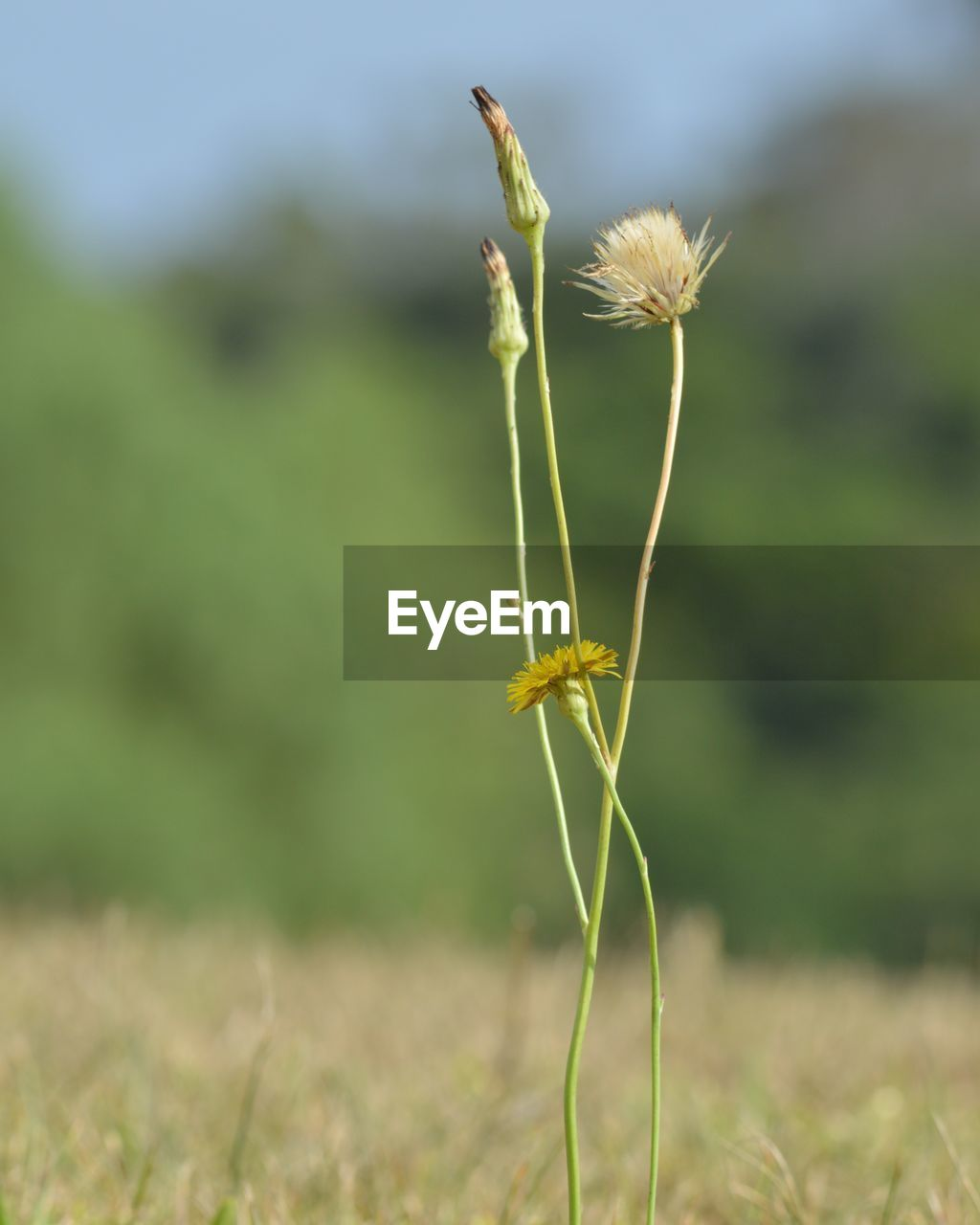 growth, nature, plant, green color, field, focus on foreground, day, close-up, beauty in nature, fragility, no people, outdoors, flower, freshness, cereal plant, wheat, grass, flower head