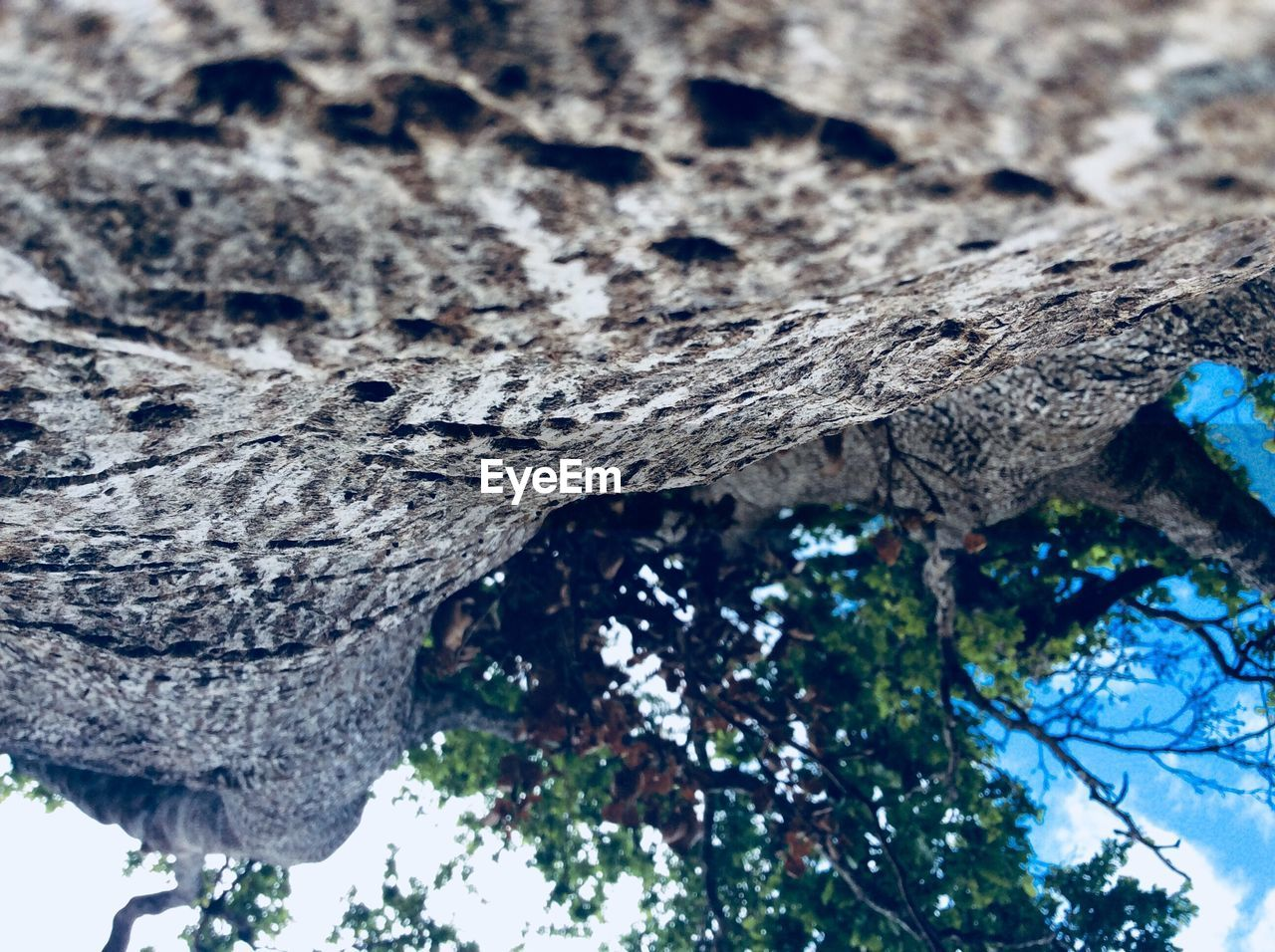 tree, plant, trunk, tree trunk, textured, nature, day, no people, low angle view, focus on foreground, rough, close-up, branch, growth, wood - material, plant bark, outdoors, pattern, bark, selective focus, lichen