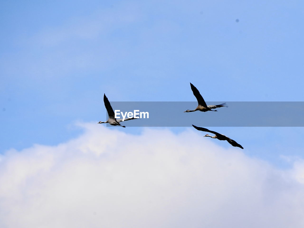 flying, sky, animal wildlife, low angle view, animals in the wild, bird, animal themes, vertebrate, group of animals, animal, spread wings, mid-air, no people, nature, cloud - sky, day, blue, motion, beauty in nature, outdoors