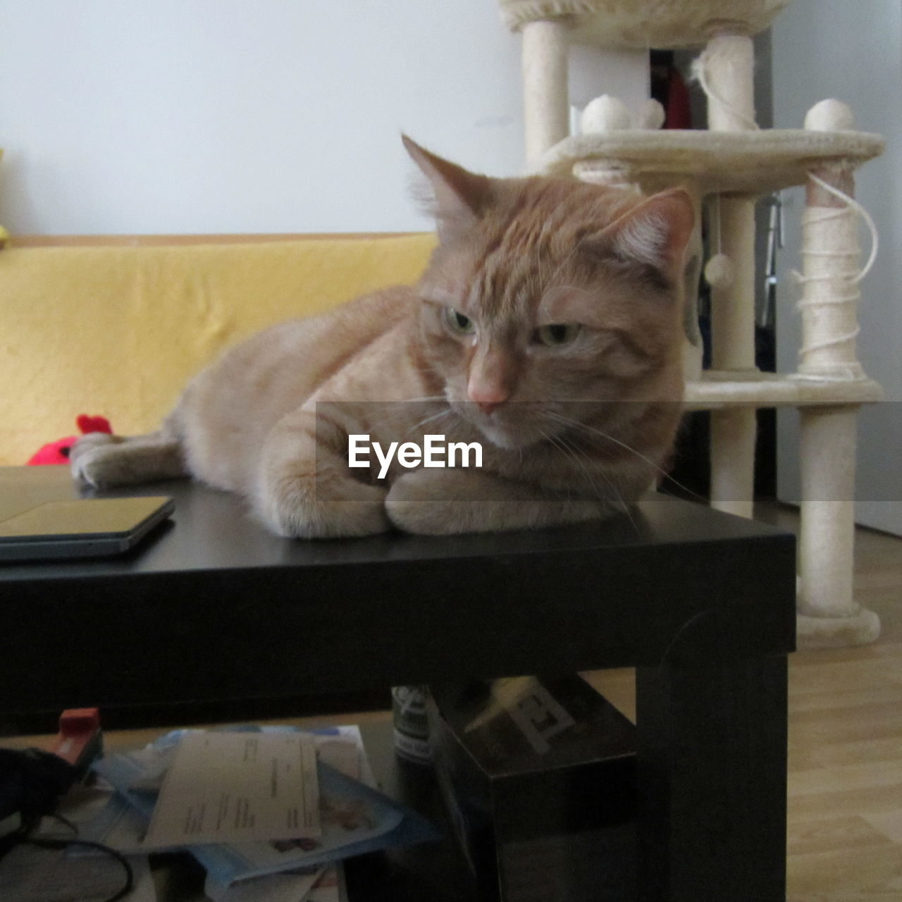 Ginger cat lying on table