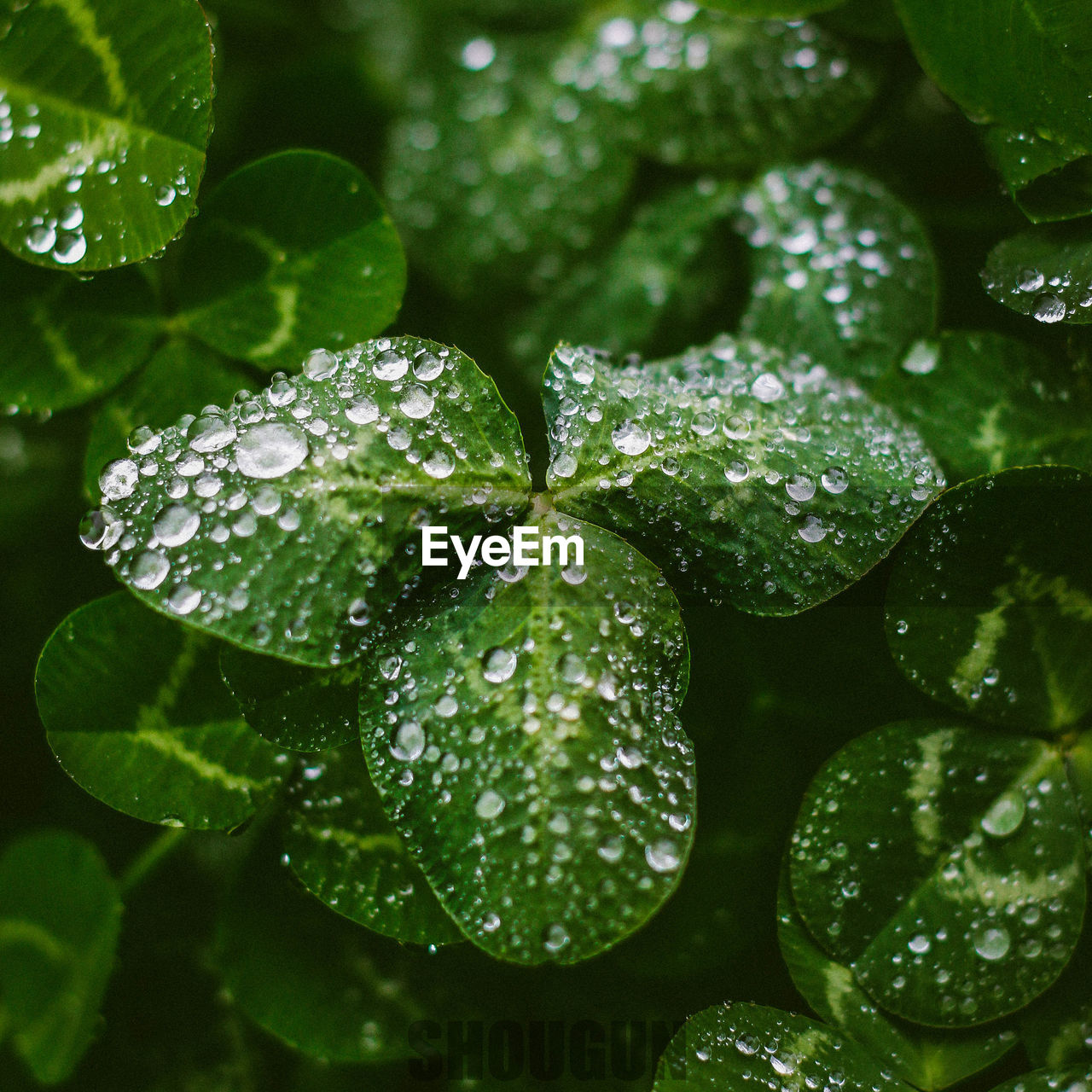 leaf, water, plant part, drop, wet, growth, green color, plant, freshness, close-up, no people, nature, beauty in nature, day, full frame, food and drink, rain, outdoors, leaves, rainy season, raindrop, dew, purity