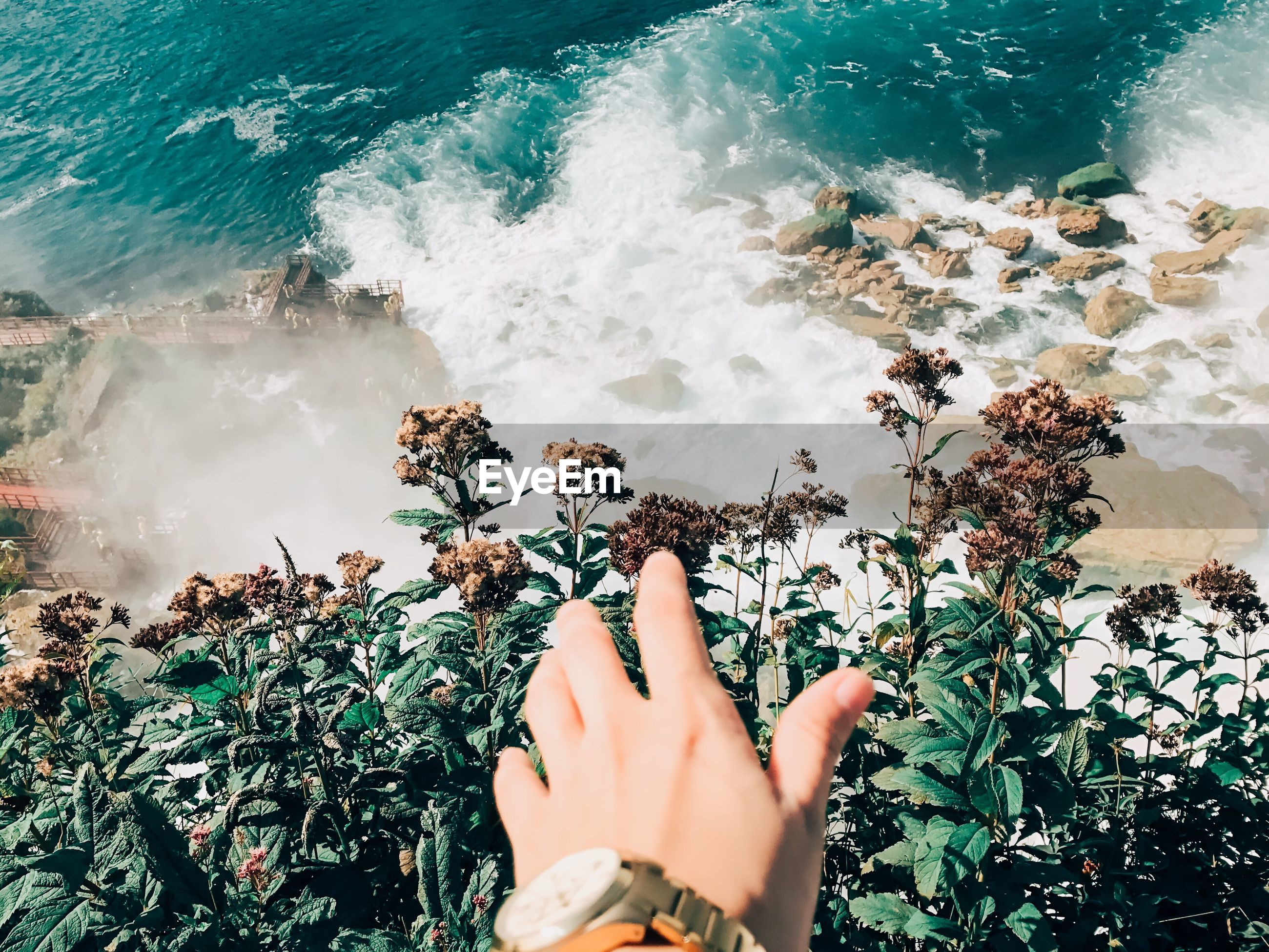 Cropped hand of man reaching plants against sea