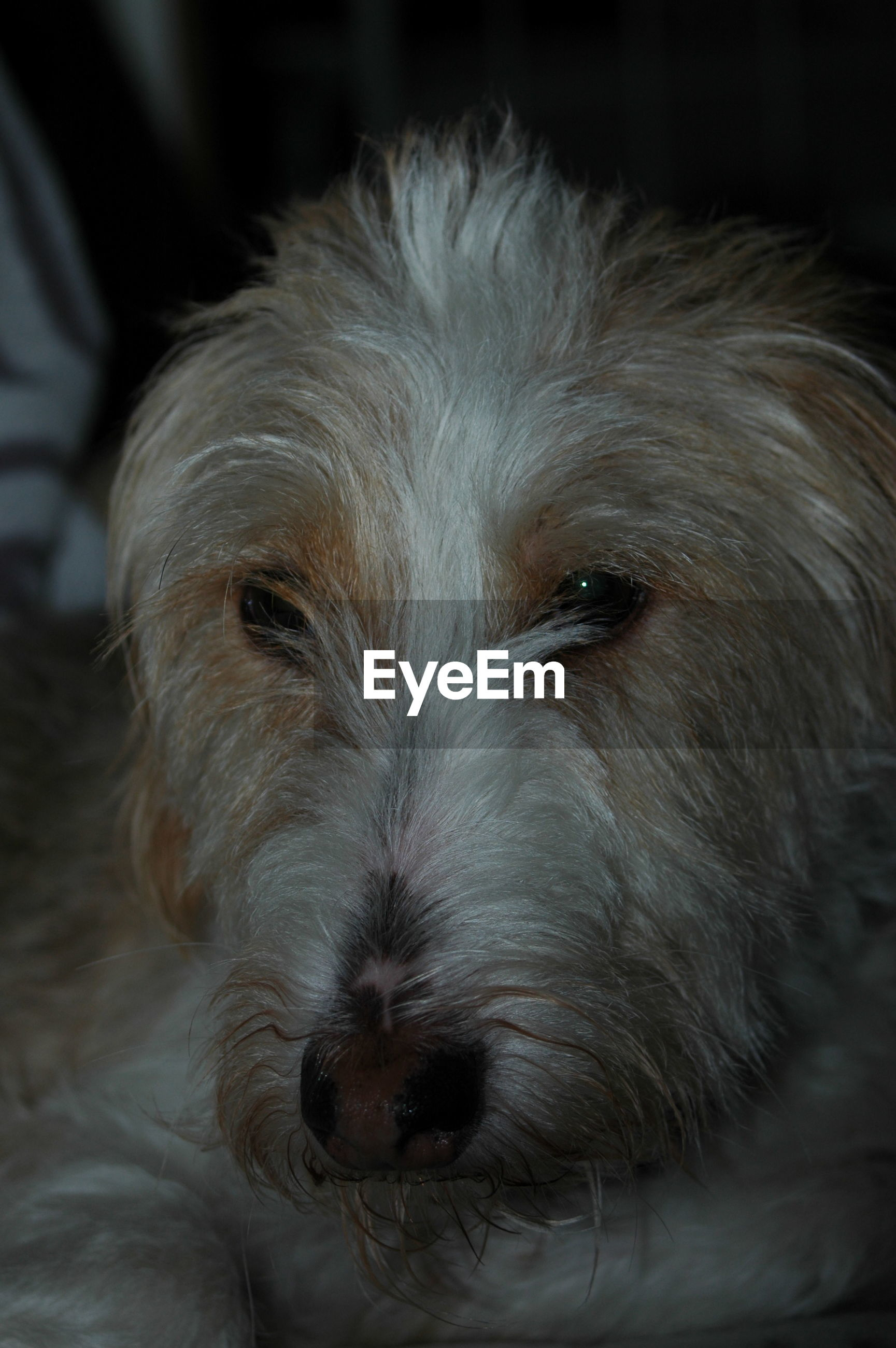 CLOSE-UP PORTRAIT OF A DOG WITH EYES