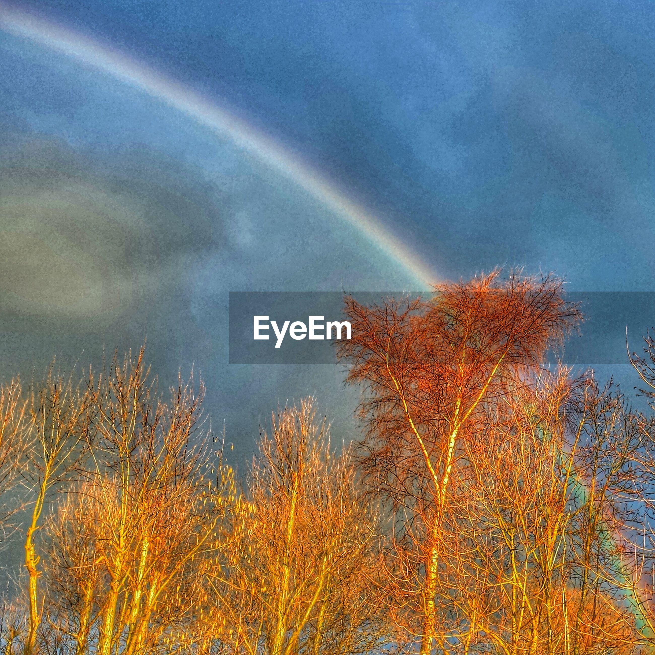 Rainbow above trees against sky