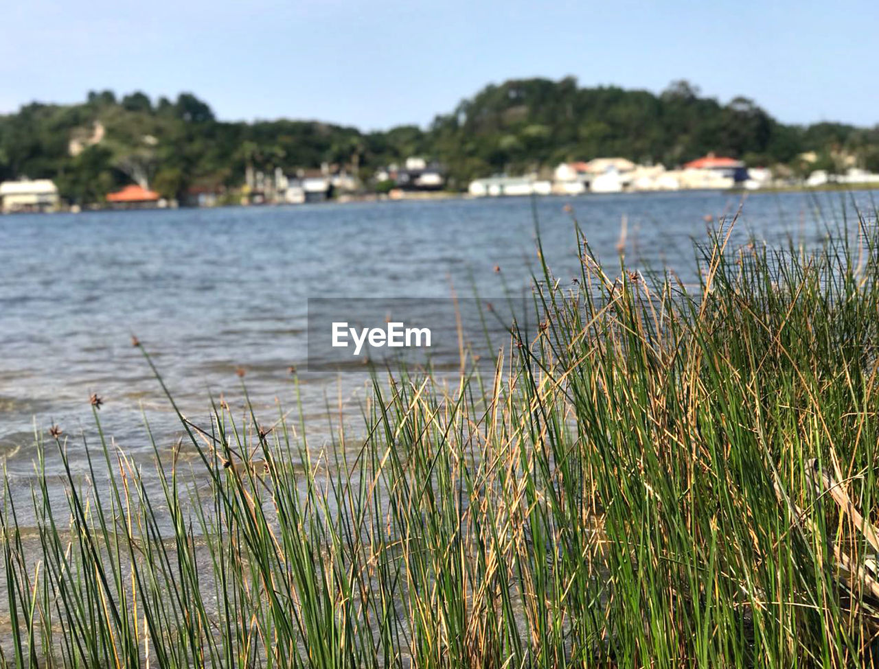 water, plant, growth, tranquility, nature, grass, day, beauty in nature, focus on foreground, sea, tranquil scene, beach, land, no people, sky, scenics - nature, outdoors, clear sky, marram grass