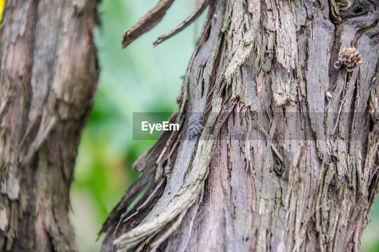 tree trunk, tree, trunk, plant, focus on foreground, textured, close-up, rough, day, plant bark, no people, selective focus, nature, outdoors, wood - material, pattern, bark, growth, natural pattern, animals in the wild, lichen