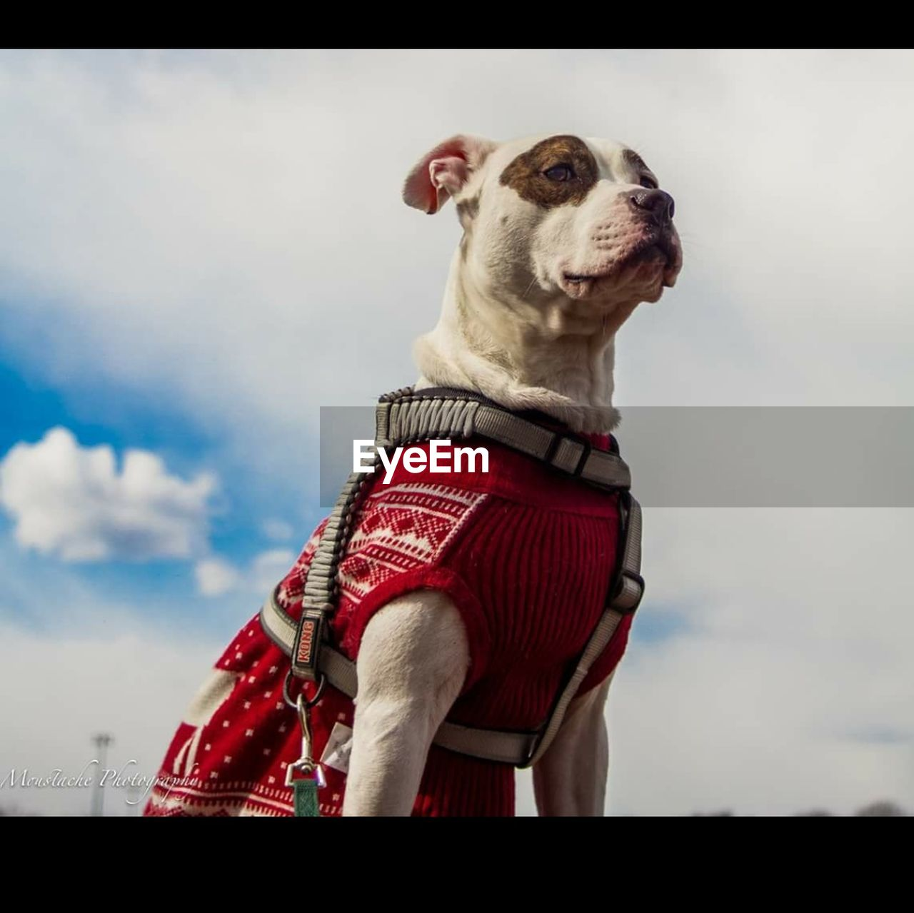 one animal, animal themes, domestic animals, sky, pets, mammal, cloud - sky, standing, dog, outdoors, low angle view, day, real people, one person