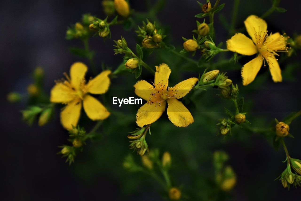 flower, flowering plant, yellow, plant, fragility, vulnerability, beauty in nature, growth, freshness, close-up, flower head, petal, nature, inflorescence, no people, focus on foreground, selective focus, day, green color, outdoors, pollen