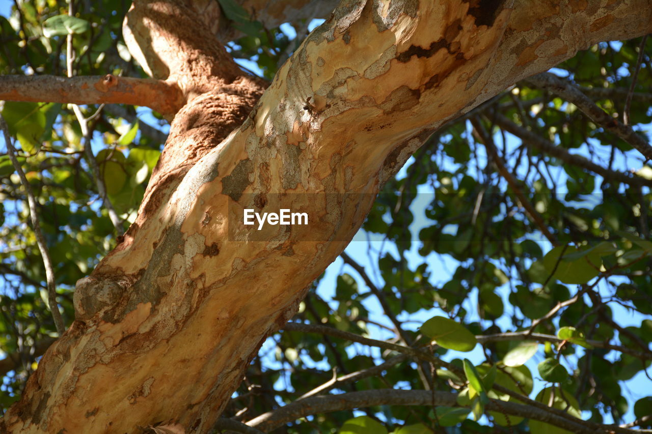 tree, plant, low angle view, tree trunk, trunk, branch, focus on foreground, day, no people, nature, animal, animal wildlife, animals in the wild, animal themes, one animal, growth, outdoors, leaf, close-up, plant part