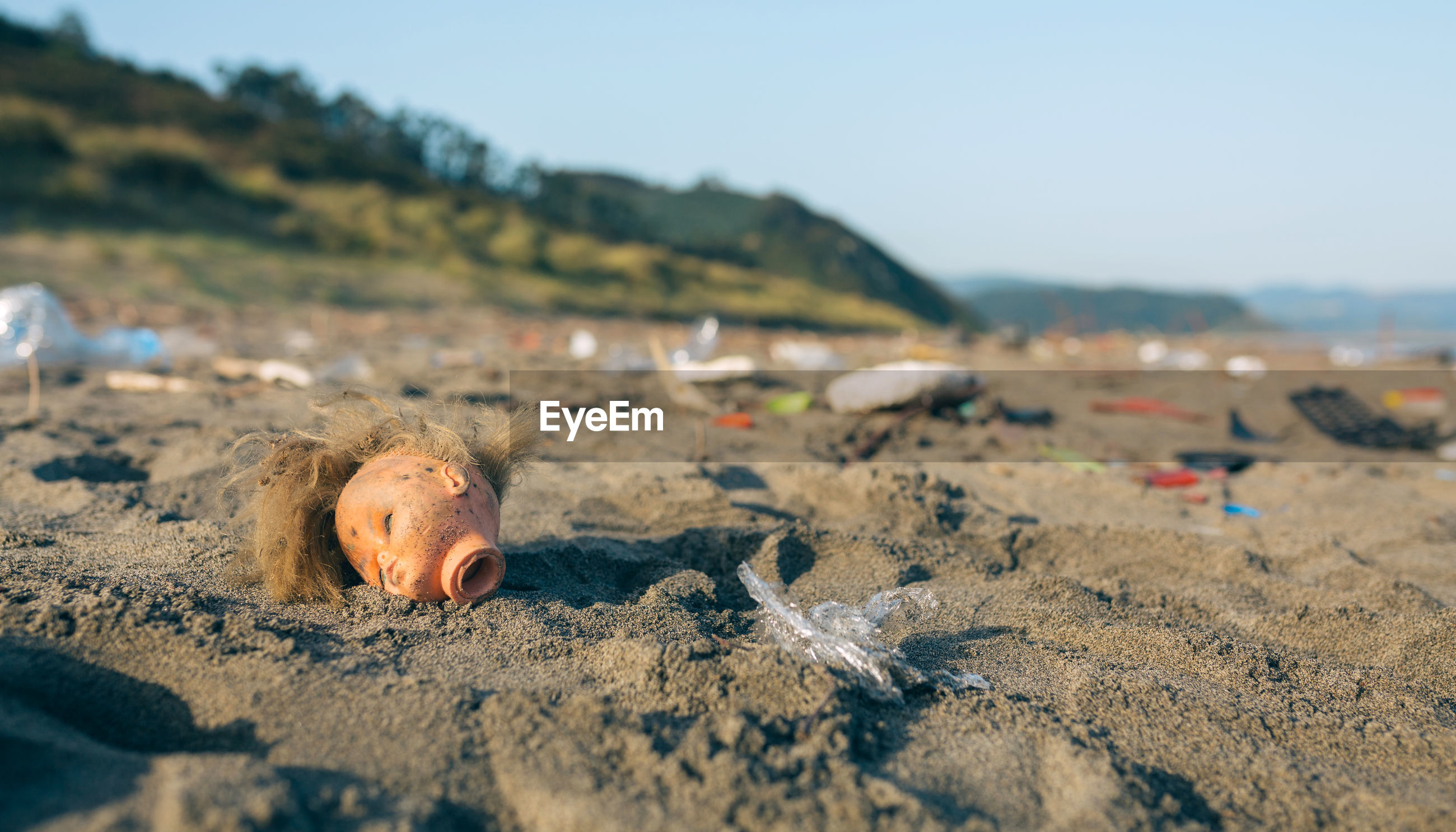CLOSE-UP OF ANIMAL ON BEACH