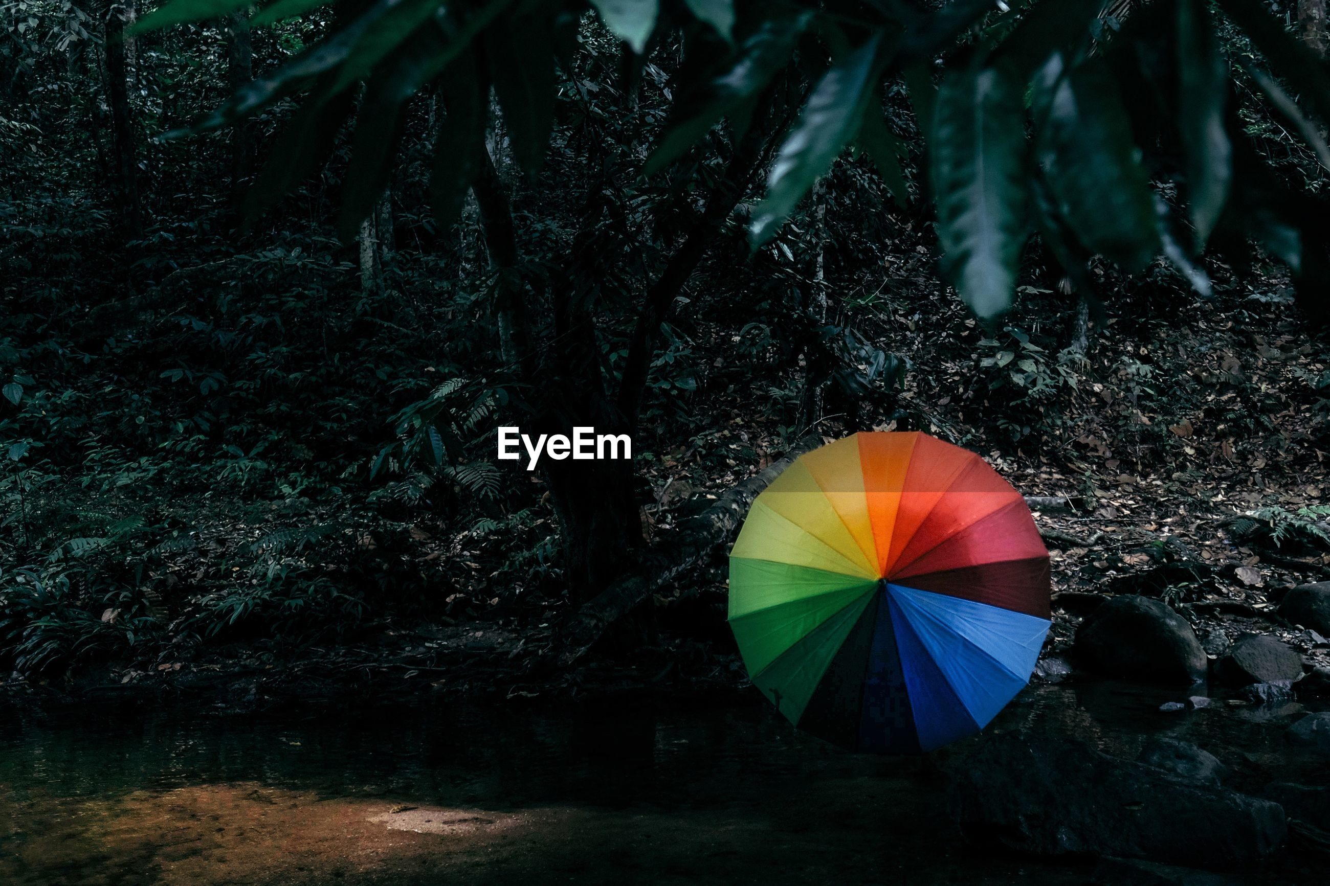 Multi colored umbrella against trees in forest