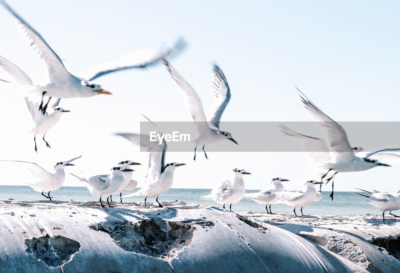 group of animals, animals in the wild, animal wildlife, animal themes, animal, vertebrate, flying, bird, large group of animals, spread wings, nature, no people, sky, winter, water, day, beauty in nature, cold temperature, seagull, flock of birds