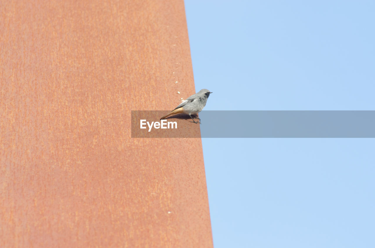 Low Angle View Of Bird Perching On Retaining Wall Against Clear Sky