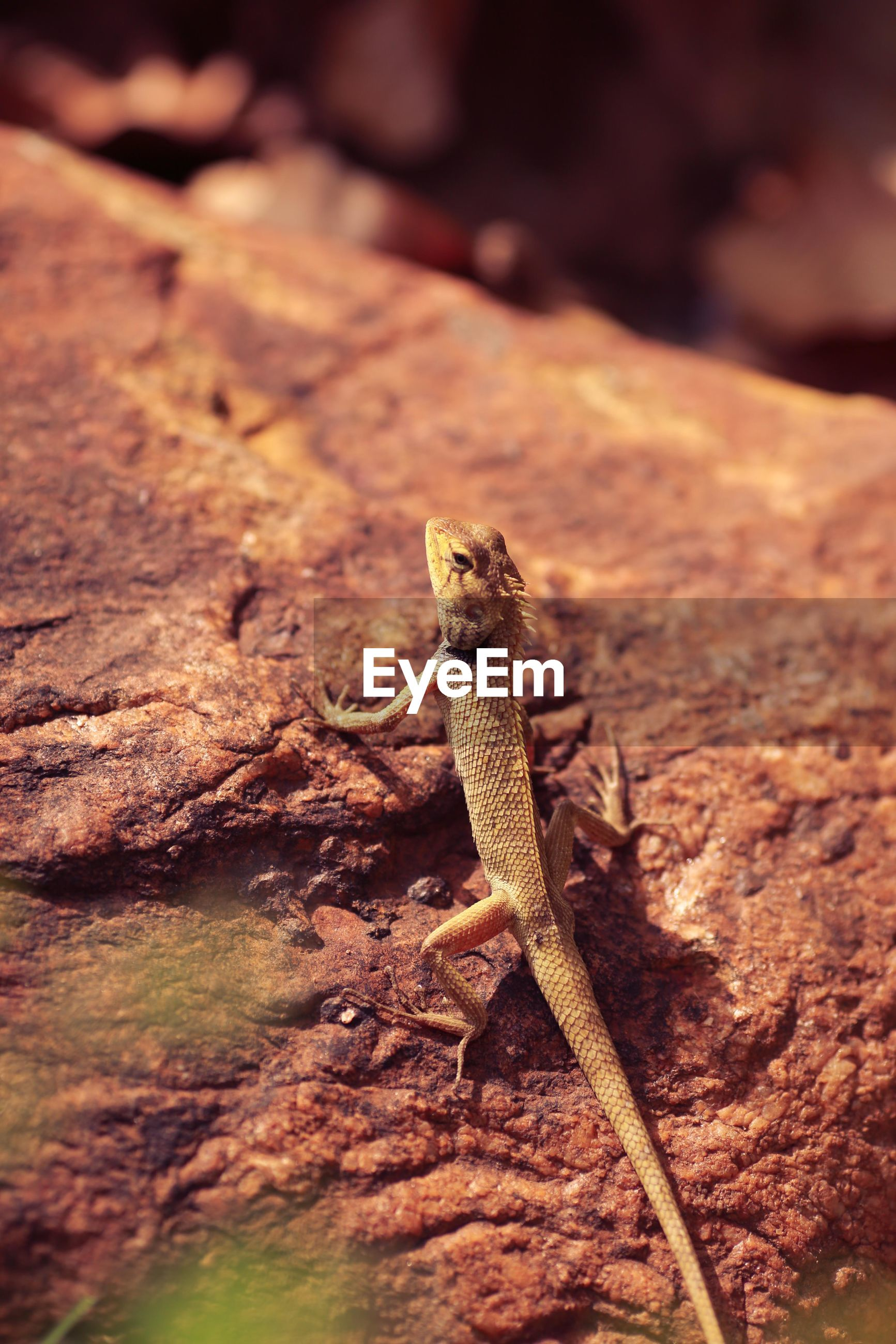 animal themes, one animal, animals in the wild, wildlife, lizard, focus on foreground, reptile, selective focus, full length, rock - object, nature, close-up, outdoors, side view, no people, day, sunlight, zoology, wood - material, squirrel