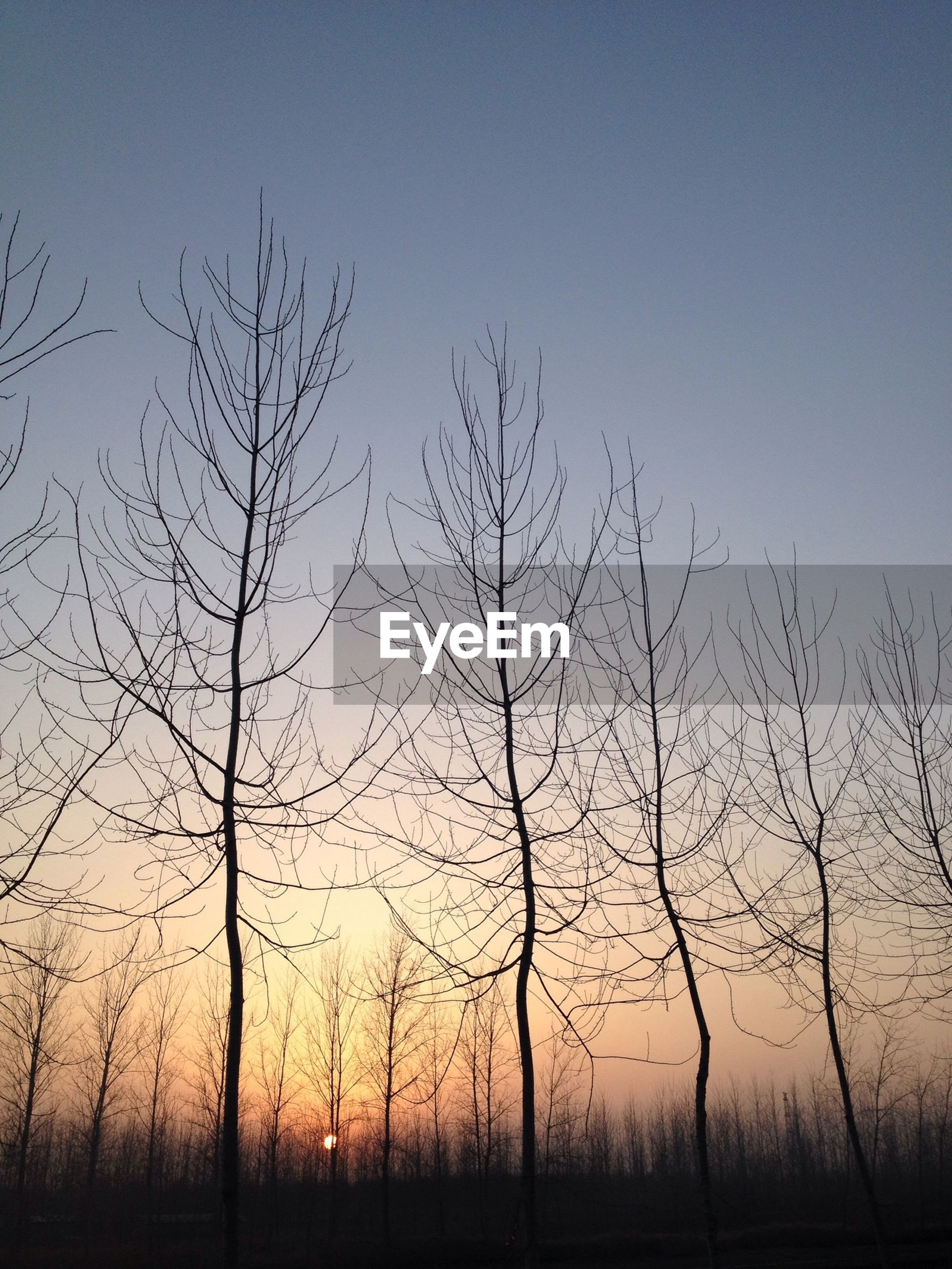 bare tree, tranquility, tree, tranquil scene, landscape, silhouette, scenics, nature, clear sky, beauty in nature, field, branch, sunset, sky, non-urban scene, tree trunk, remote, idyllic, no people, outdoors