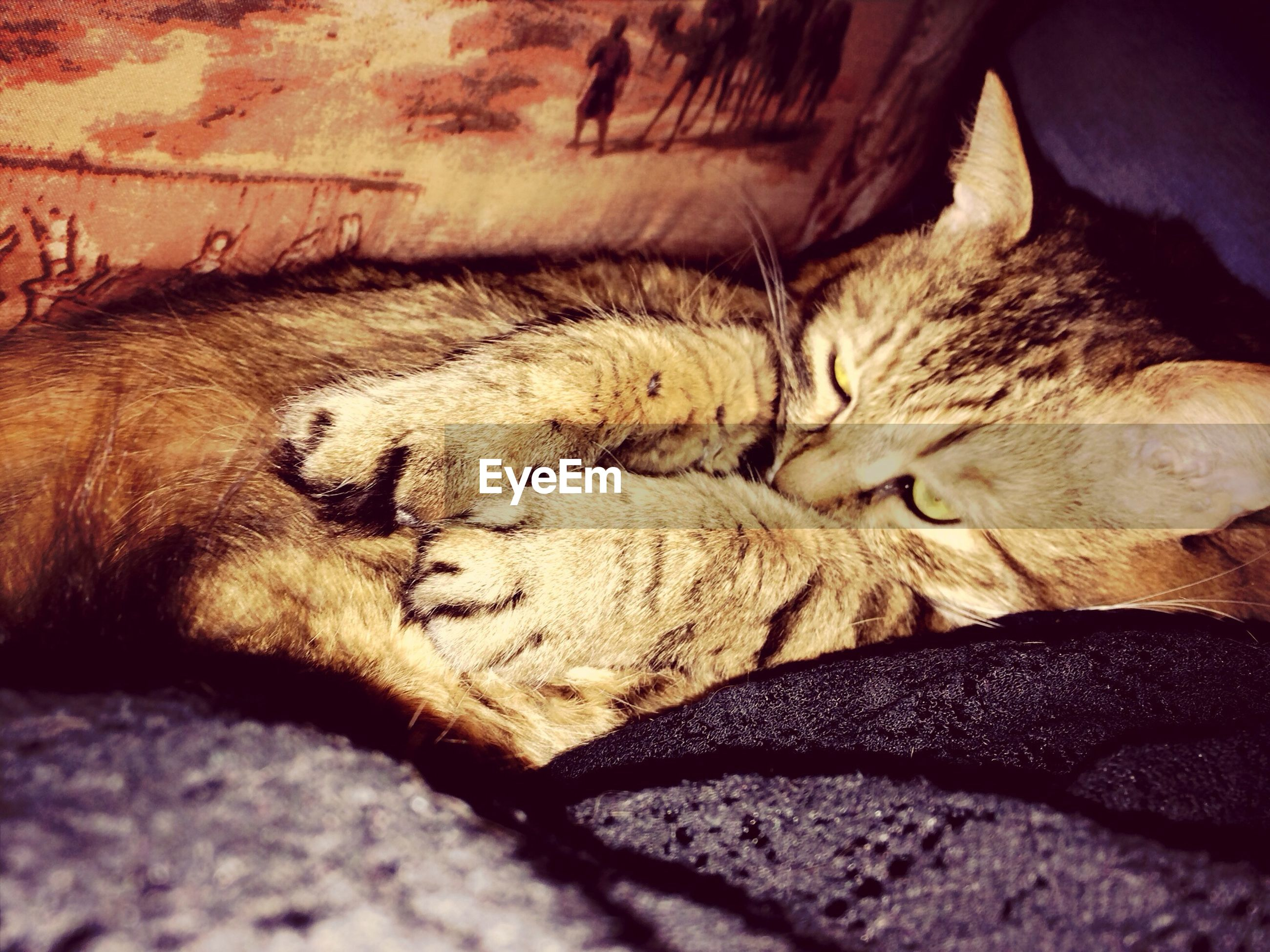 sleeping, animal themes, domestic animals, pets, mammal, one animal, relaxation, resting, lying down, indoors, domestic cat, eyes closed, cat, dog, feline, bed, close-up, relaxing, selective focus, comfortable