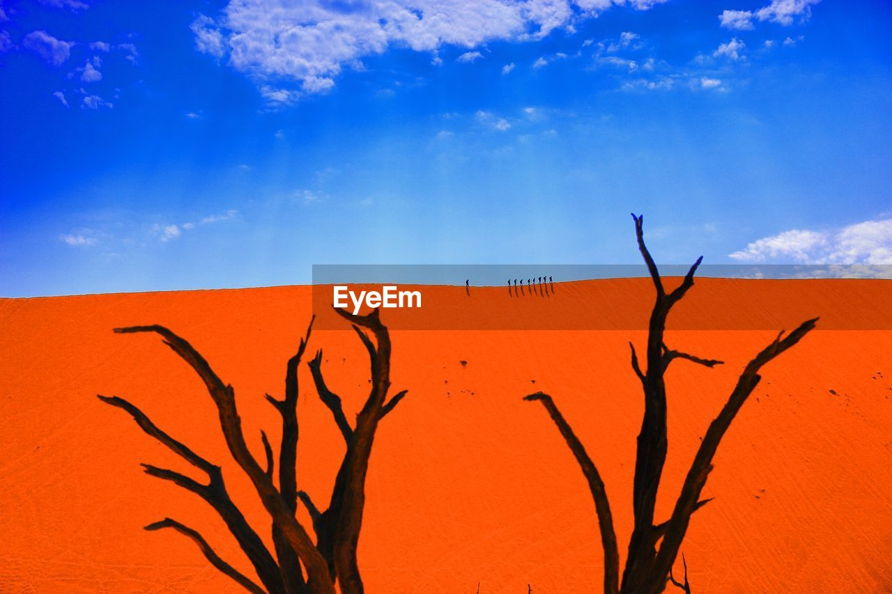 sky, arid climate, blue, outdoors, low angle view, no people, day, tree, branch, red, nature, desert, bare tree, beauty in nature, sand dune, dead tree