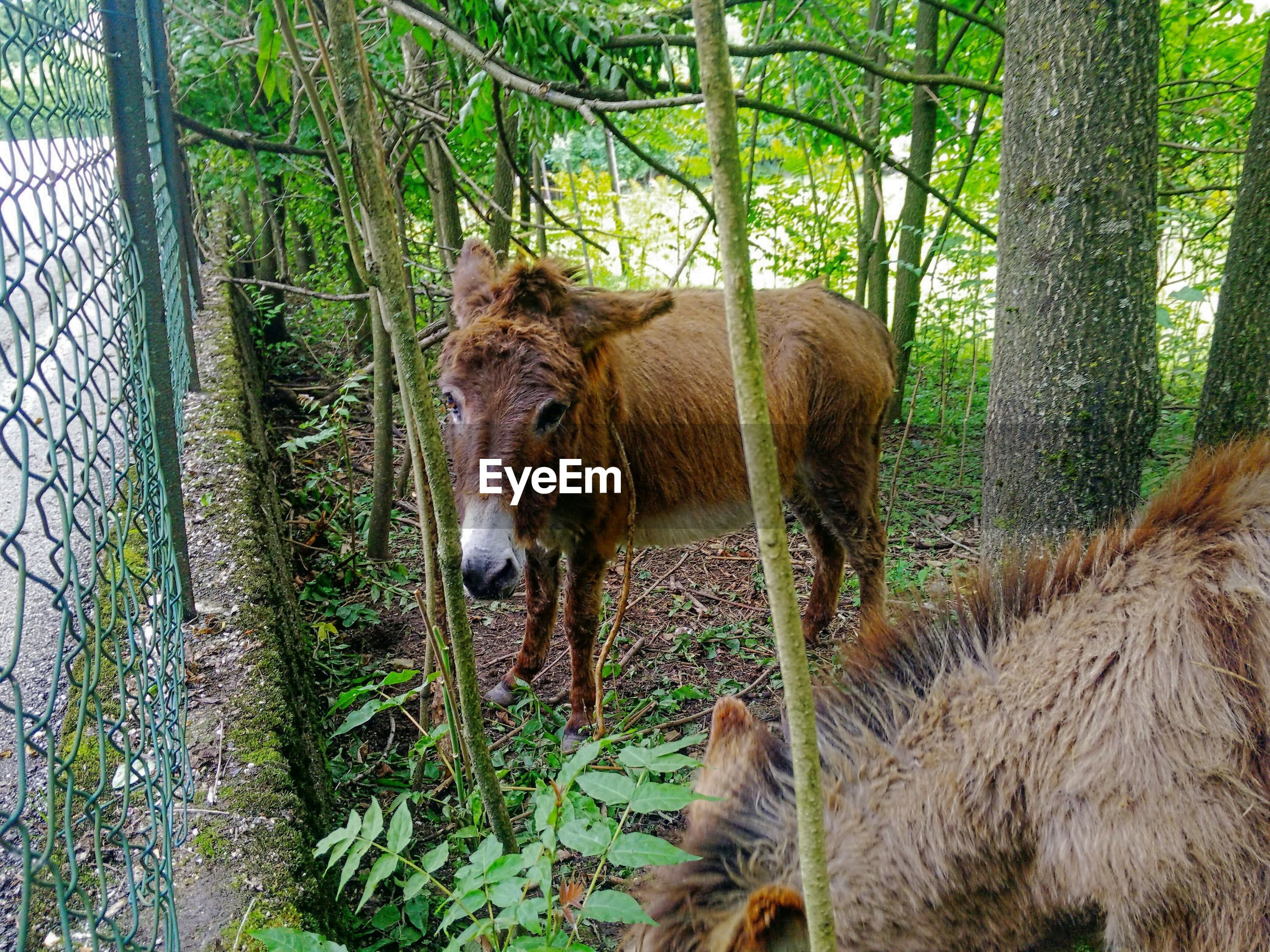 one animal, animal themes, horse, domestic animals, mammal, day, tree, livestock, nature, no people, outdoors