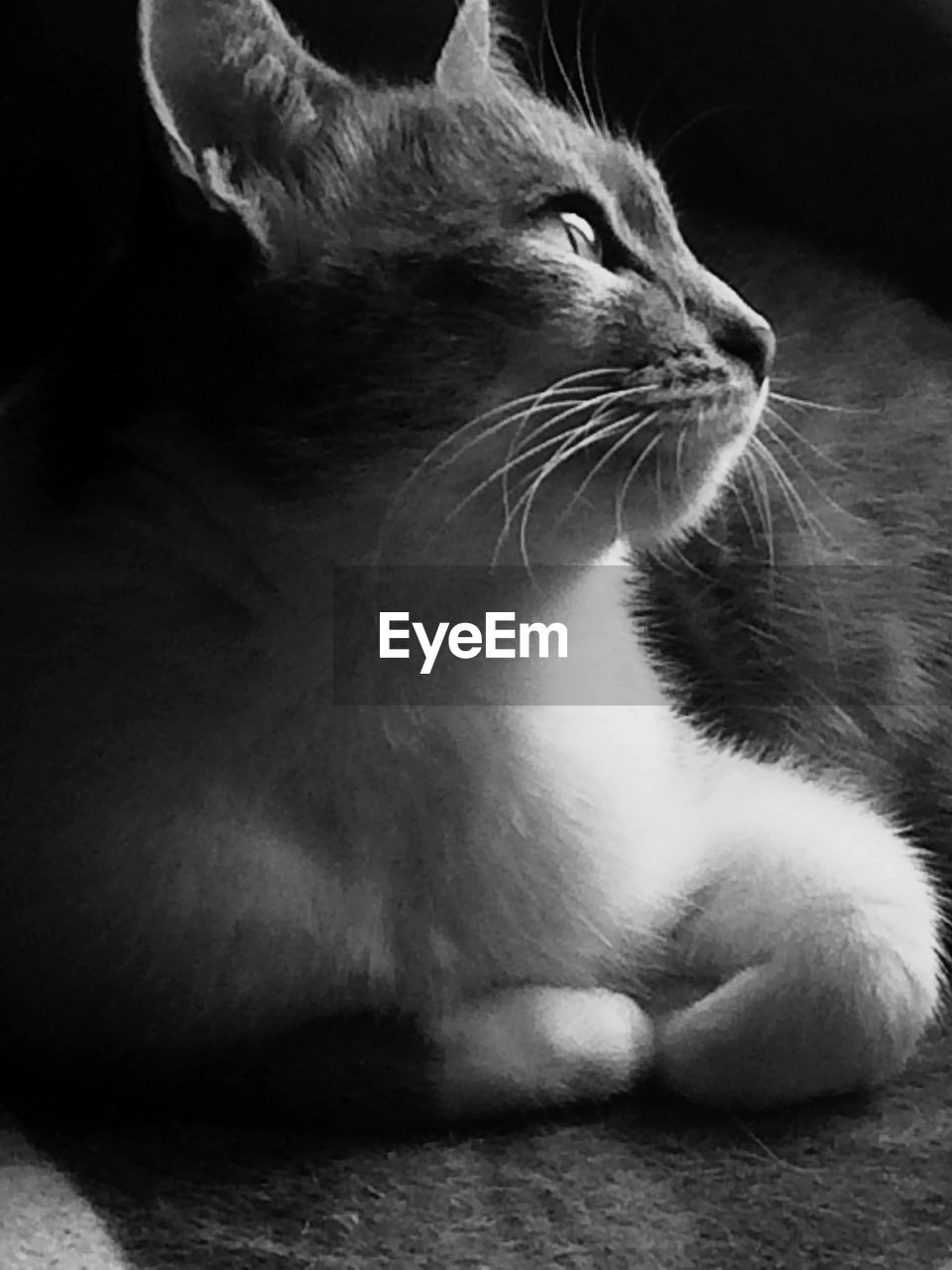 domestic cat, one animal, pets, animal themes, feline, domestic animals, whisker, cat, mammal, close-up, no people, indoors, sitting, day