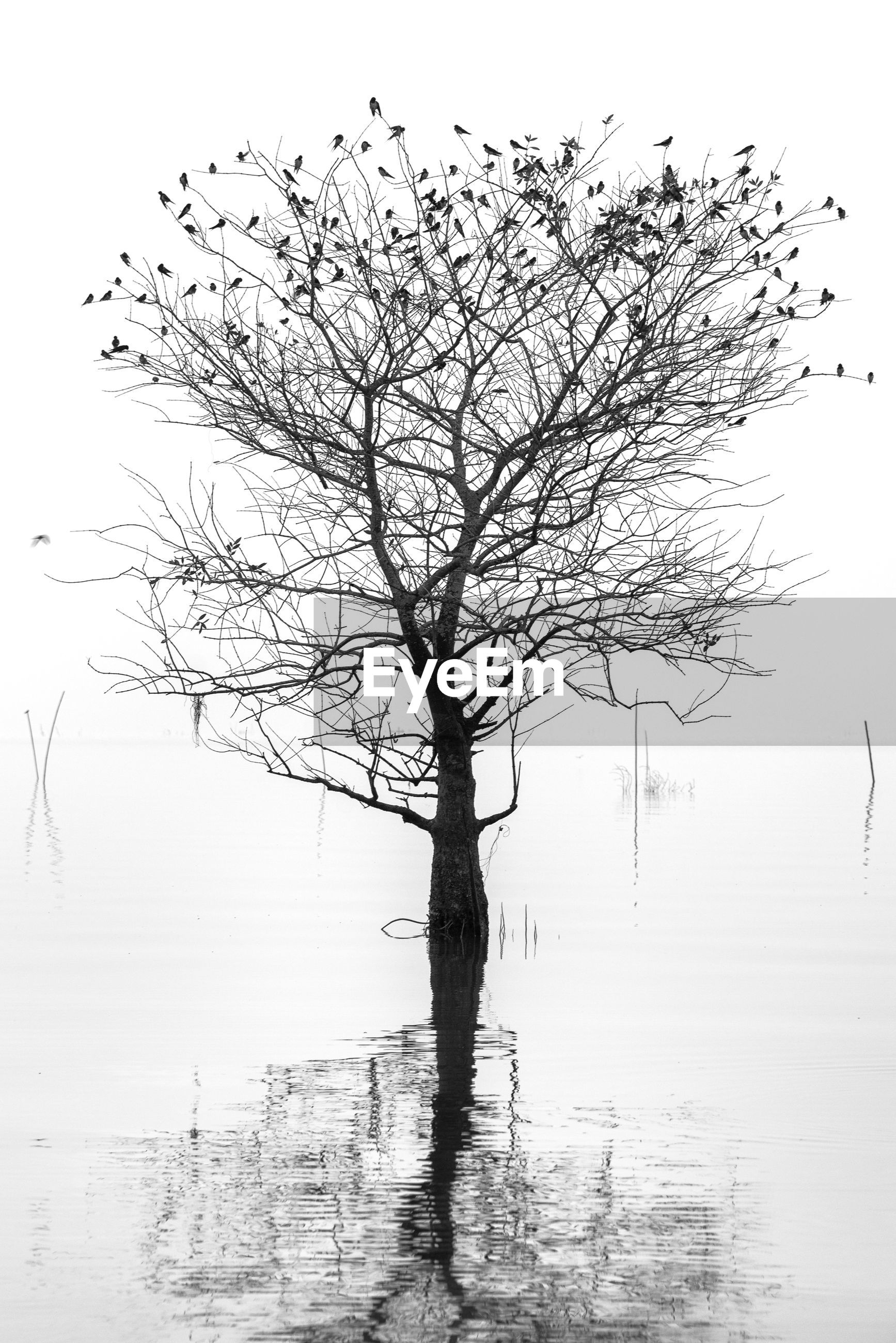 BARE TREE BY LAKE AGAINST SKY