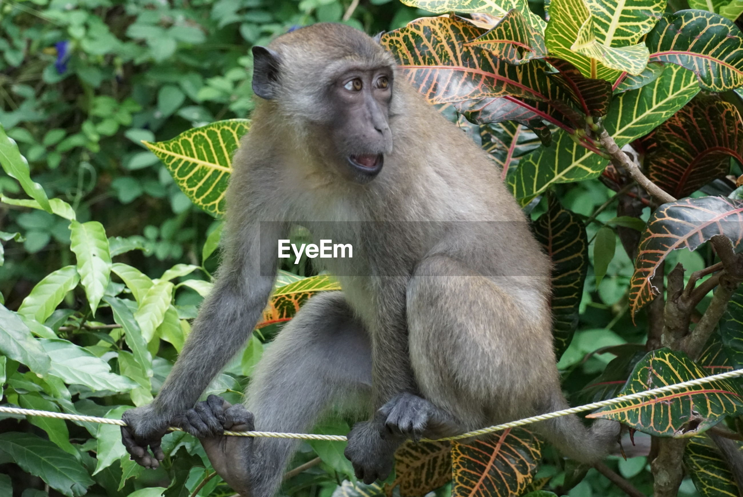 animals in the wild, animal wildlife, one animal, animal themes, mammal, monkey, day, nature, plant, outdoors, sitting, no people, full length, baboon, tree