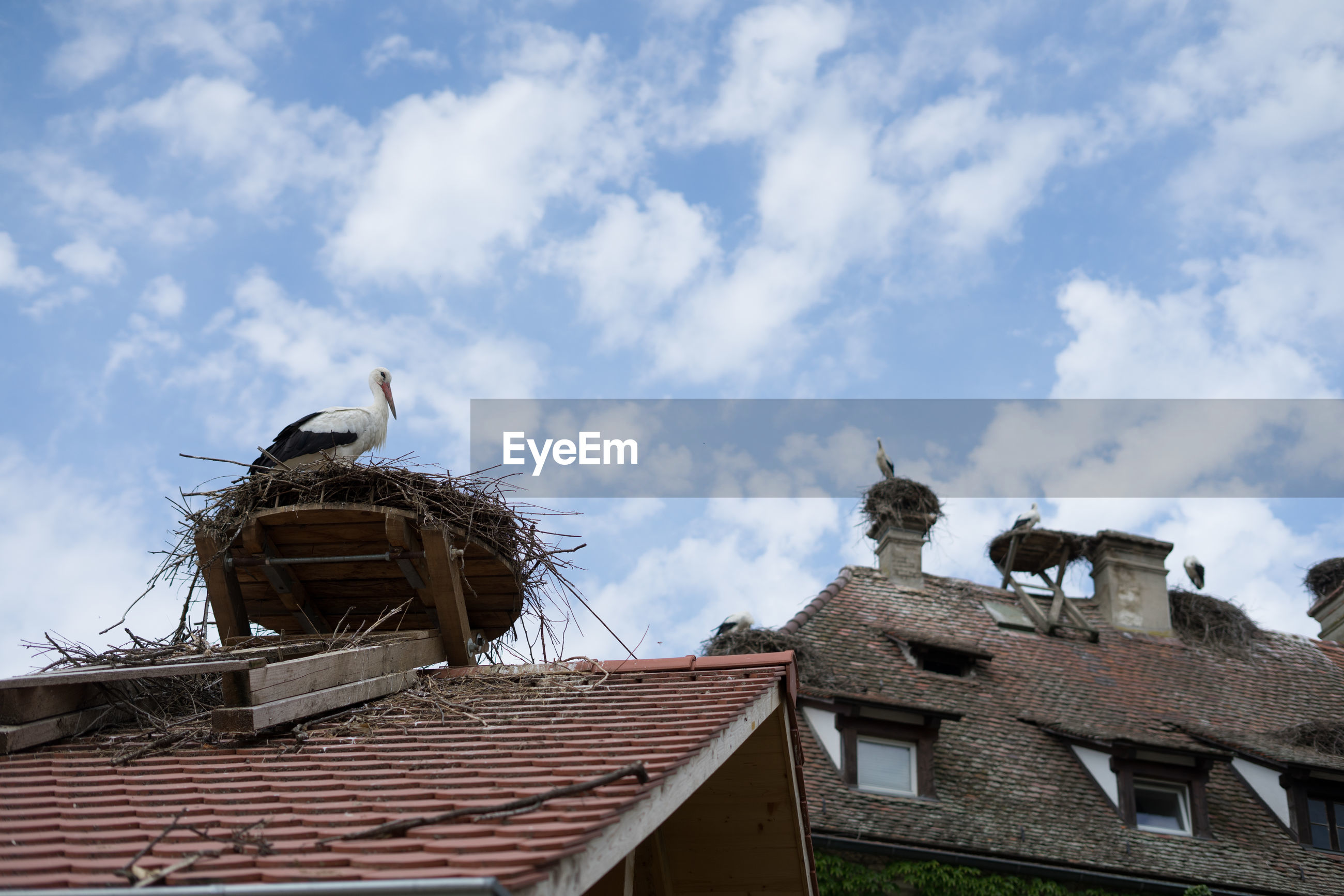 LOW ANGLE VIEW OF BIRD PERCHING ON ROOF AGAINST BUILDING