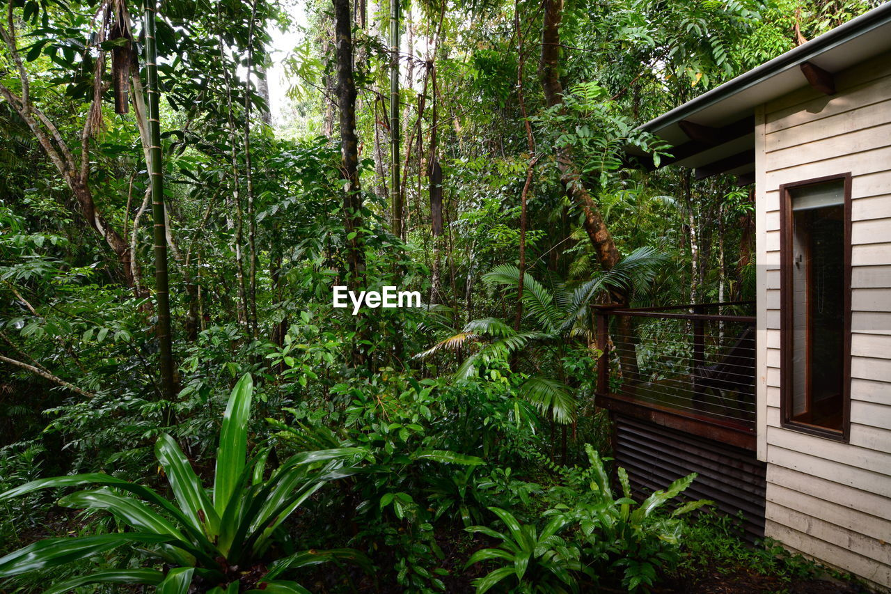 A bungalow into the nature. Mossman. Queensland. Australia Tree Plant Architecture Growth Nature Built Structure Green Color Beauty In Nature Forest No People Outdoors Tranquility House Window Building Exterior Rainforest Leaf Building Mossman Daintree Rainforest Daintree Queensland Australia Cairns Australia