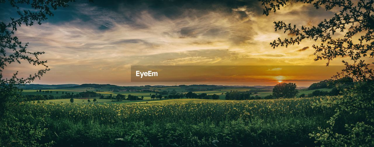 nature, landscape, sunset, tranquil scene, scenics, field, beauty in nature, agriculture, sky, tranquility, tree, no people, growth, rural scene, plant, outdoors, day